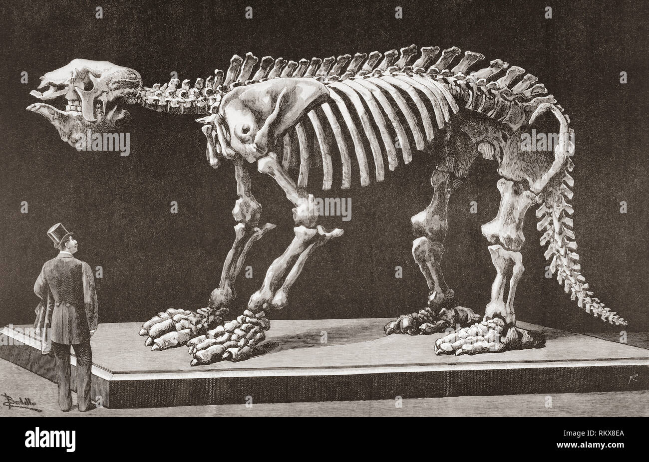 Megatherium americanum, Natural Sciences Museum, Madrid, seen here in the late 19th century.  The first Megatherium discovered in Argentina in 1788 was the first prehistoric animal skeleton mounted in 1795.  From La Ilustracion Espanola y Americana, published 1892. - Stock Image