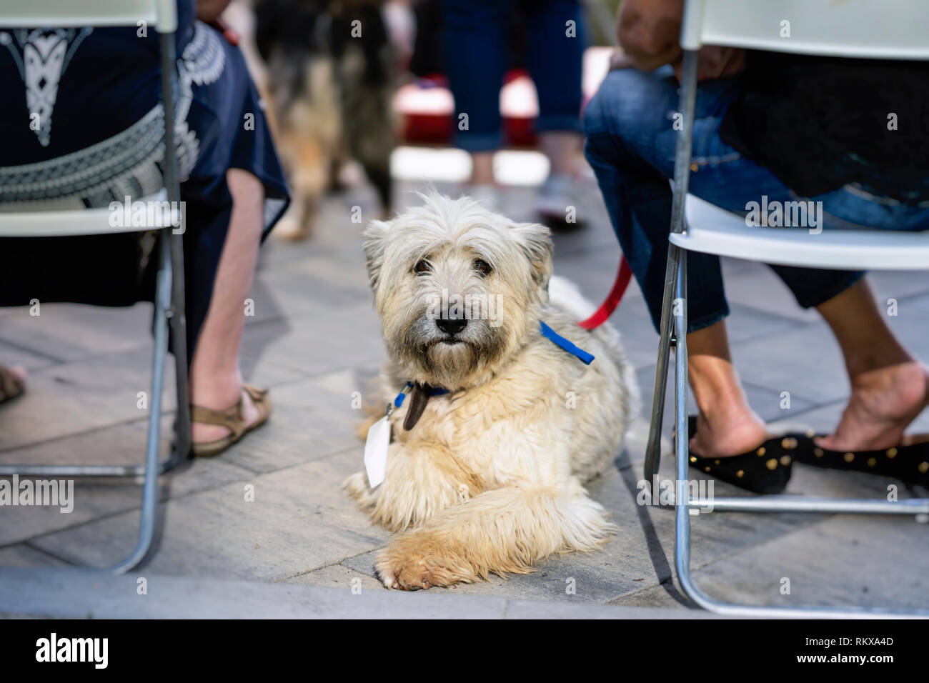 Dog from shelter with sad eyes of hope, waiting kind owner, special charity exhibition. Humanity, kindness and friendship. Concept of social problem - Stock Image