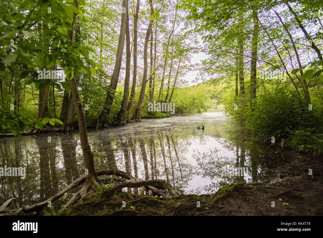 Creek connecting the Schwentine River with the Grosser Plöner See or Big Plön Lake, Plön, Schleswig-Holstein, Germany - Stock Image