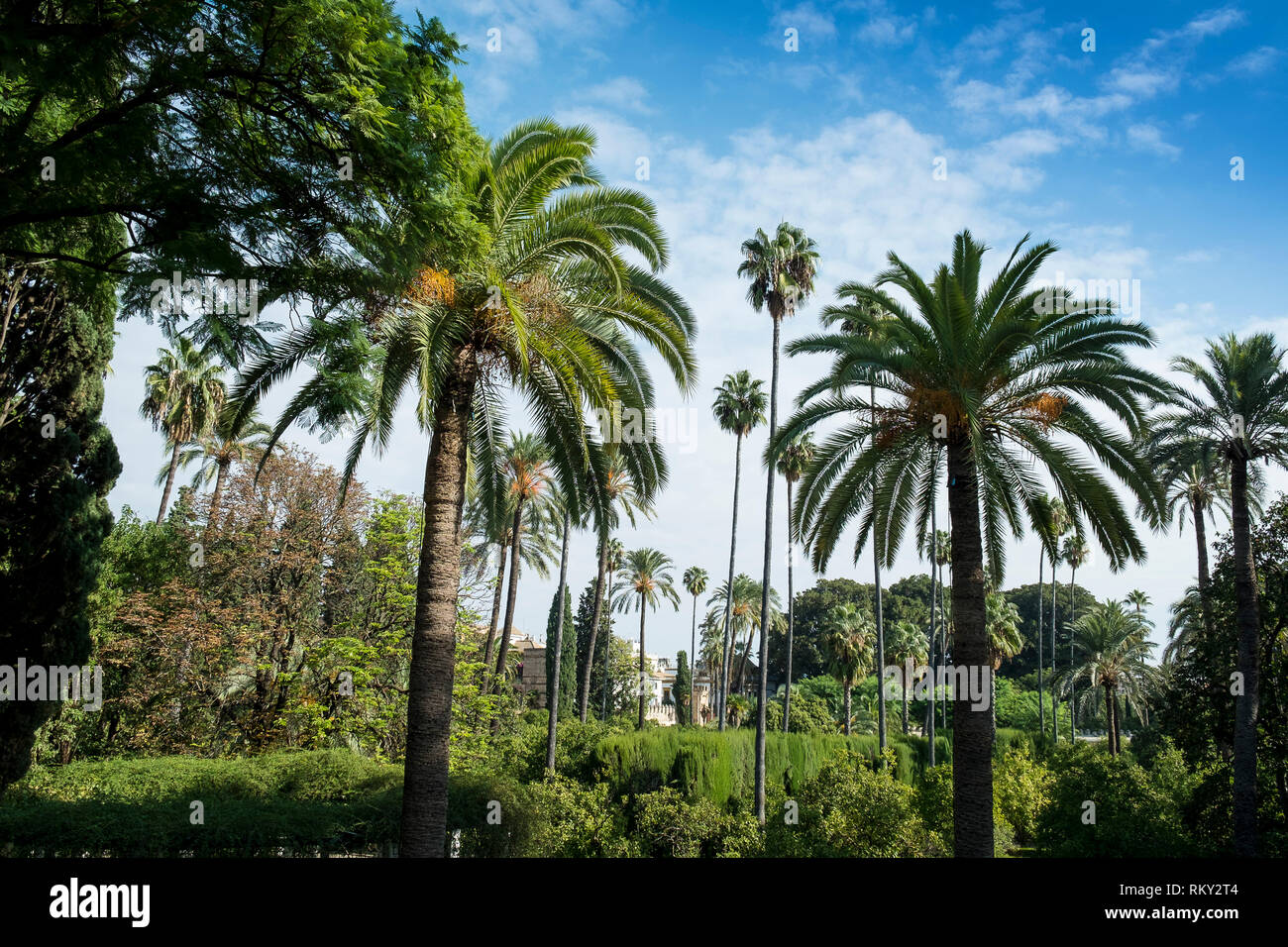 Palm trees in the Mudejar style gardens of the Royal Alcazar Palace, Seville, Spain. - Stock Image