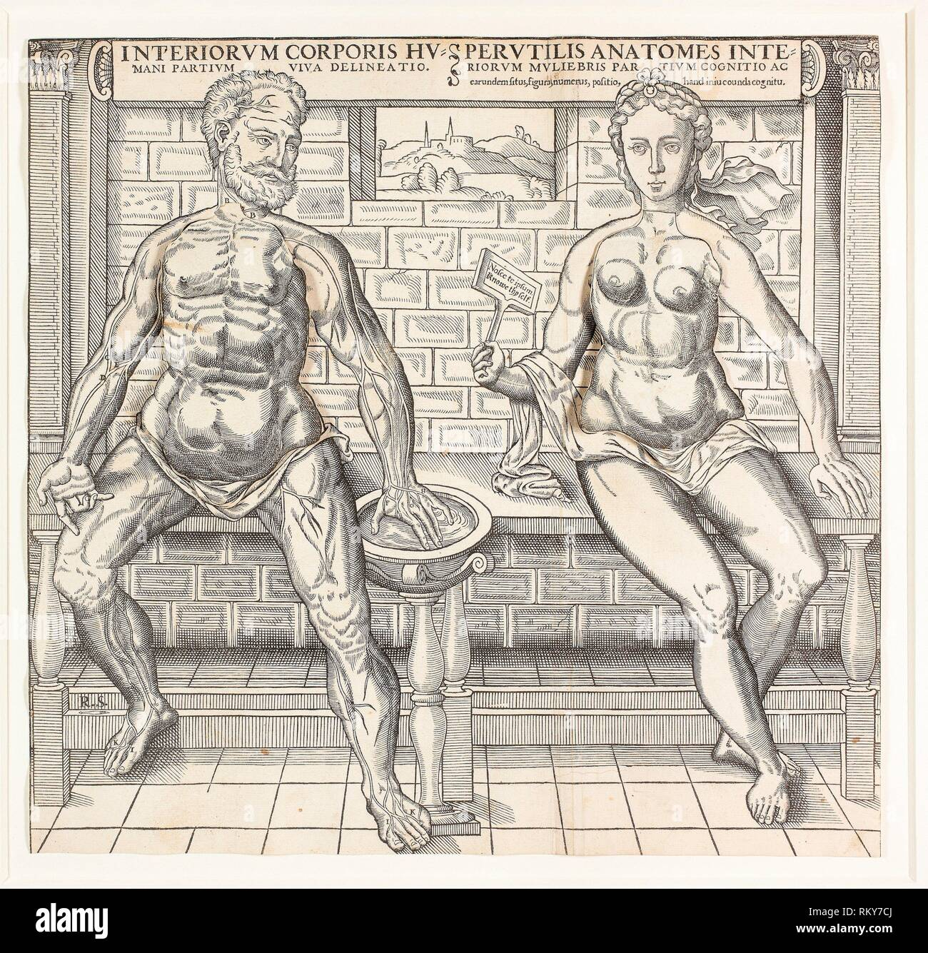 Interiorum corporis humani partium viva delineatio, from the second edition of the Compendiosa totius anatomie delineation - 1555/59 - Monogrammist - Stock Image