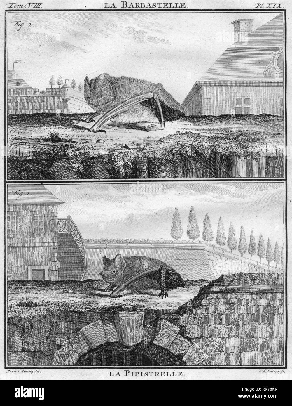 """'La Barbastelle & La Pipistrelle', c1763. The barbastelle bat and the pipistrelle bat. The """"Histoire Naturelle, générale et particulière, avec la description du Cabinet du Roi"""", (Natural History, General and Particular, with a Description of the King's Cabinet) was written 1749-1804 by the Comte de Buffon, and was continued after his death. It was a monumental work in multiple volumes, and covered what was known of the 'natural sciences' at the time, including physics, chemistry and technology as well as the natural history of animals. - Stock Image"""