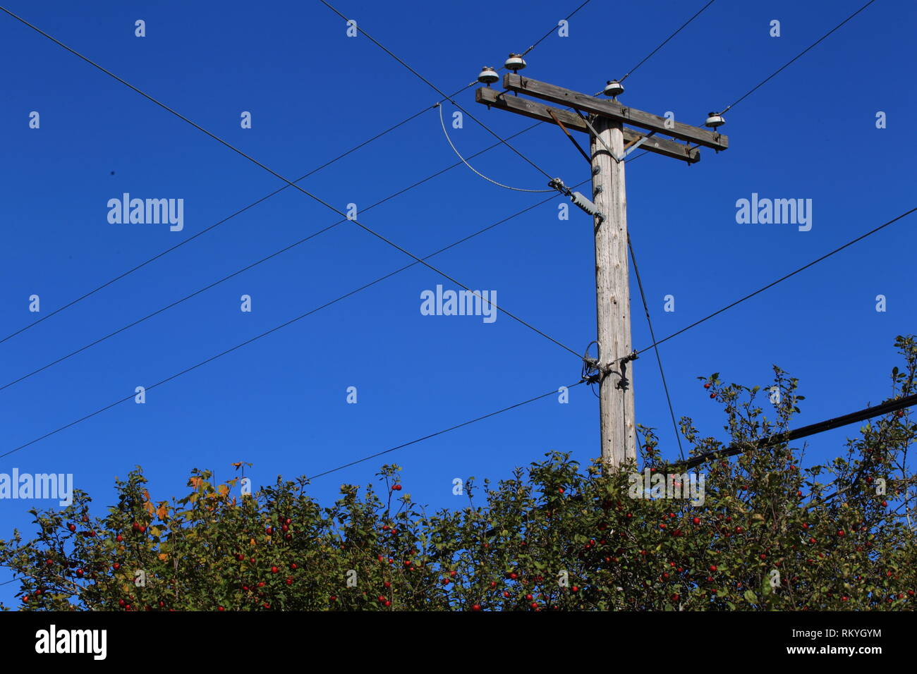 Quebec,Canada. A rural utility pole with power lines - Stock Image