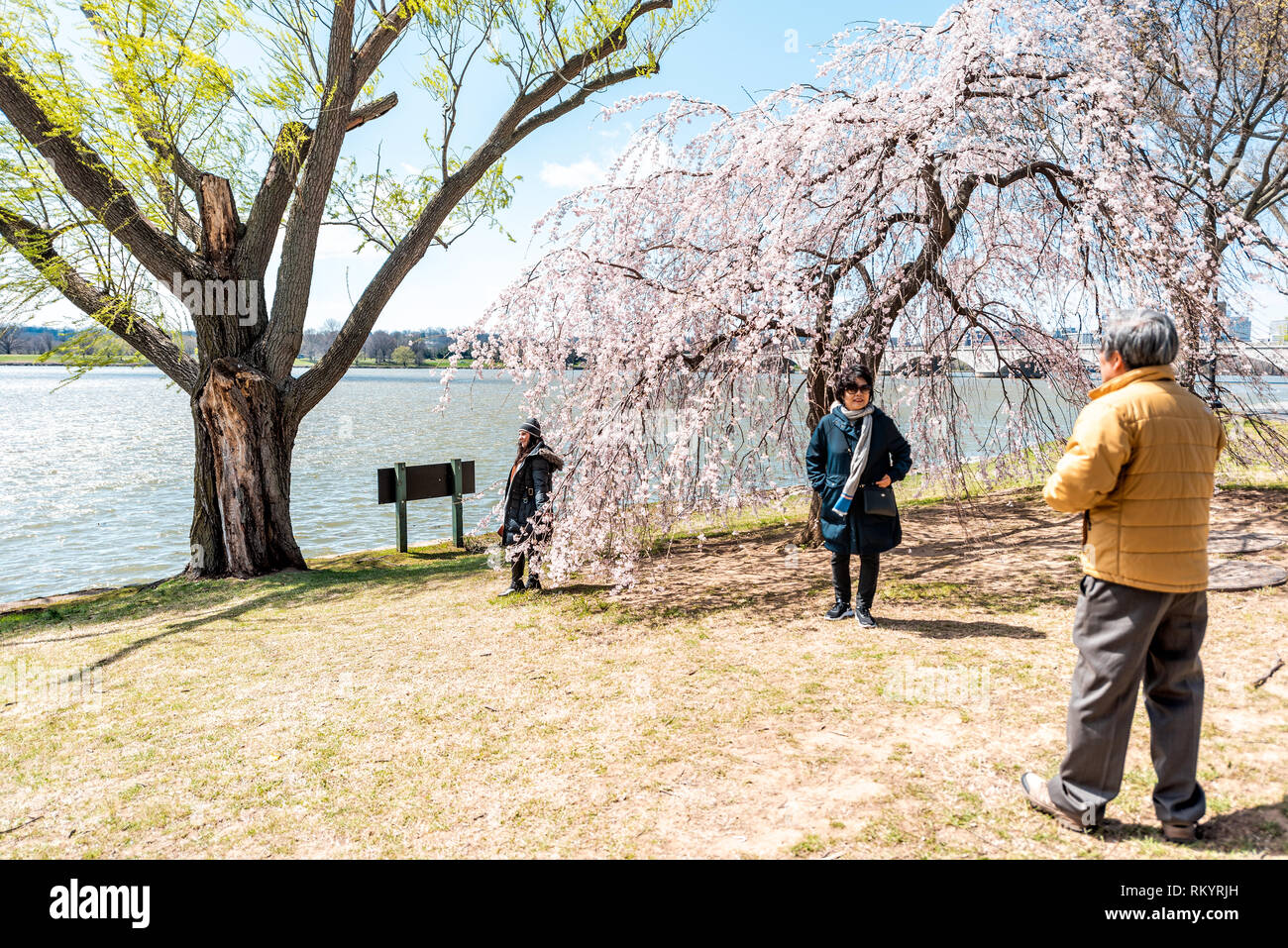 Washington DC, USA - April 5, 2018: Tourists people couple taking pictures by cherry blossom sakura trees in spring with potomac river memorial bridge - Stock Image