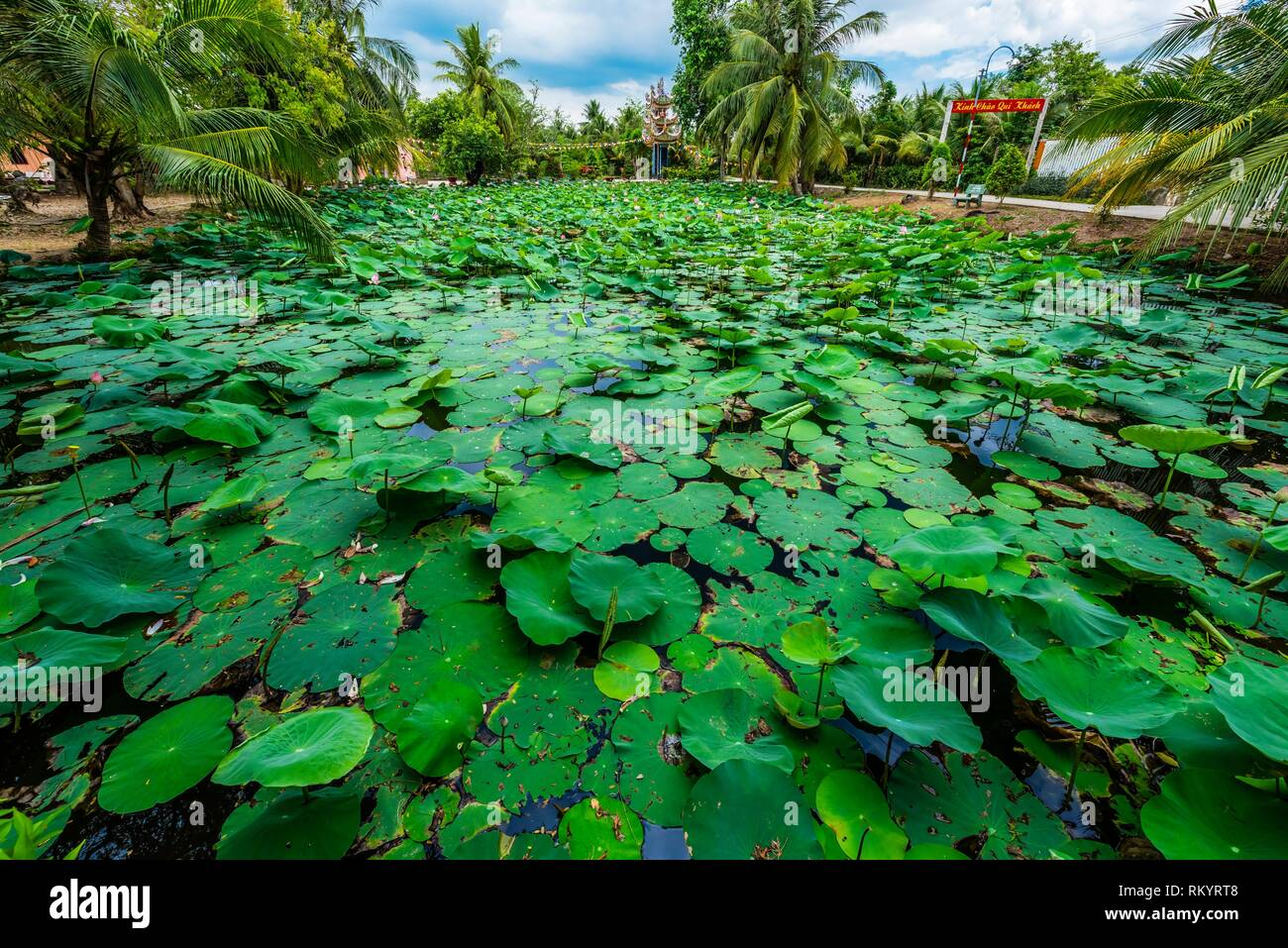 Lily pads, Buddhist temple at Long Hung, Chau Thanh, Mekong Delta, Vietnam. - Stock Image