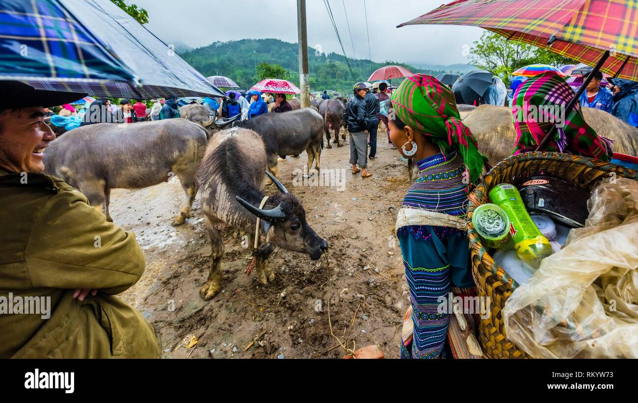 Flower Hmong women at the livestock market at Sunday market at Bac Ha, northern Vietnam. Every Sunday ethnic minorities come from surrounding - Stock Image