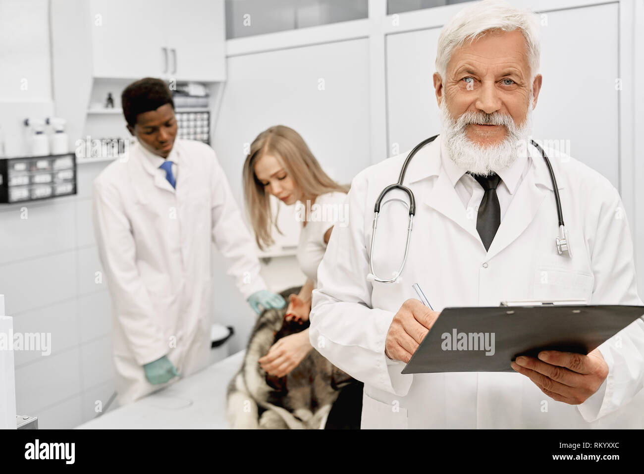 Confident elderly veterinarian with stethoscope on neck looking at camera, holding folder and posing. Owner of malamute dog and african assistant stroking big animal. - Stock Image