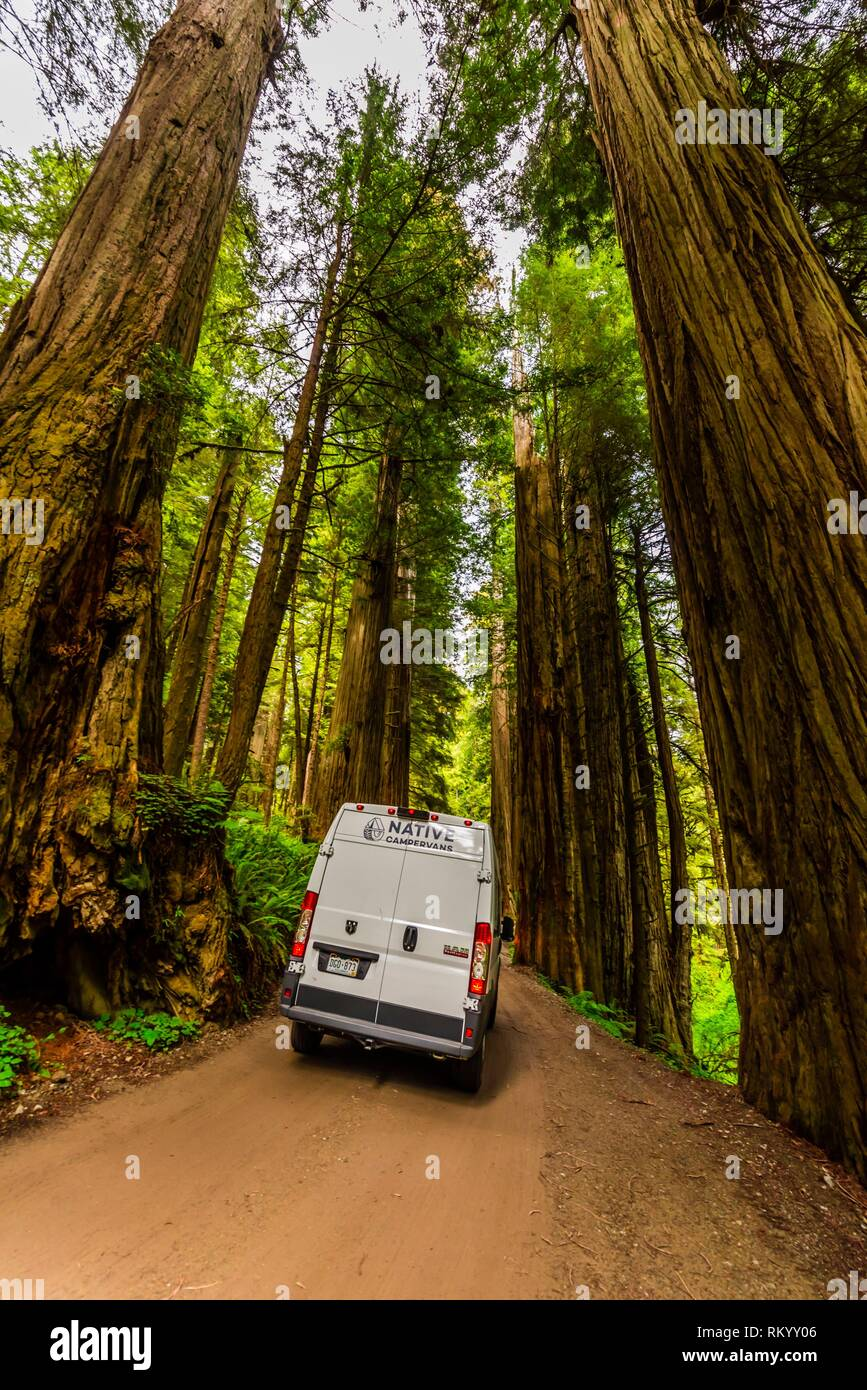 On a road trip in a camper van, driving on Howland Hills Road in Jedediah Smith Redwoods State Park, part of Redwood National and State Parks, near - Stock Image