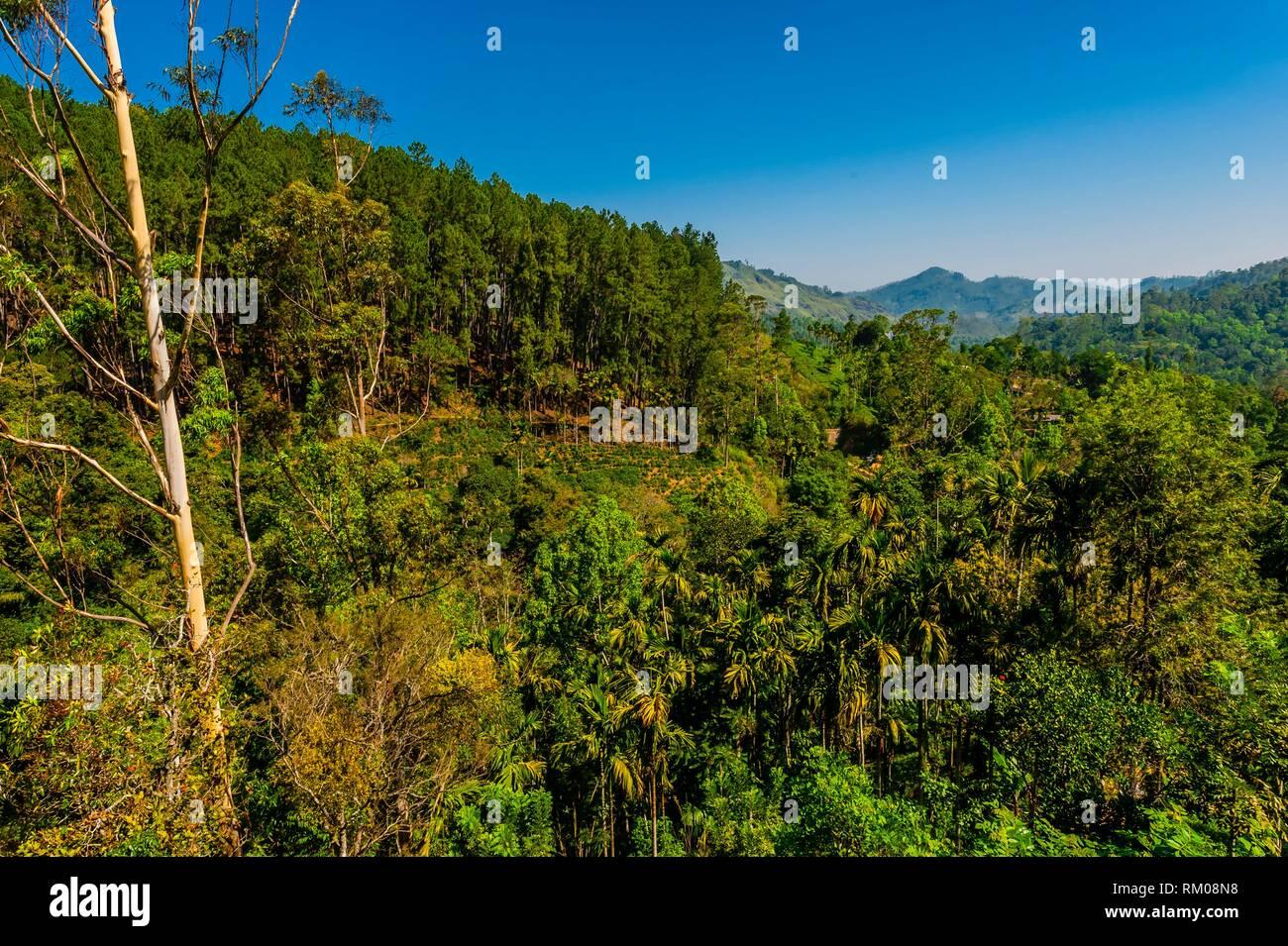 Ambagollapathana, Uva Province, Sri Lanka. - Stock Image