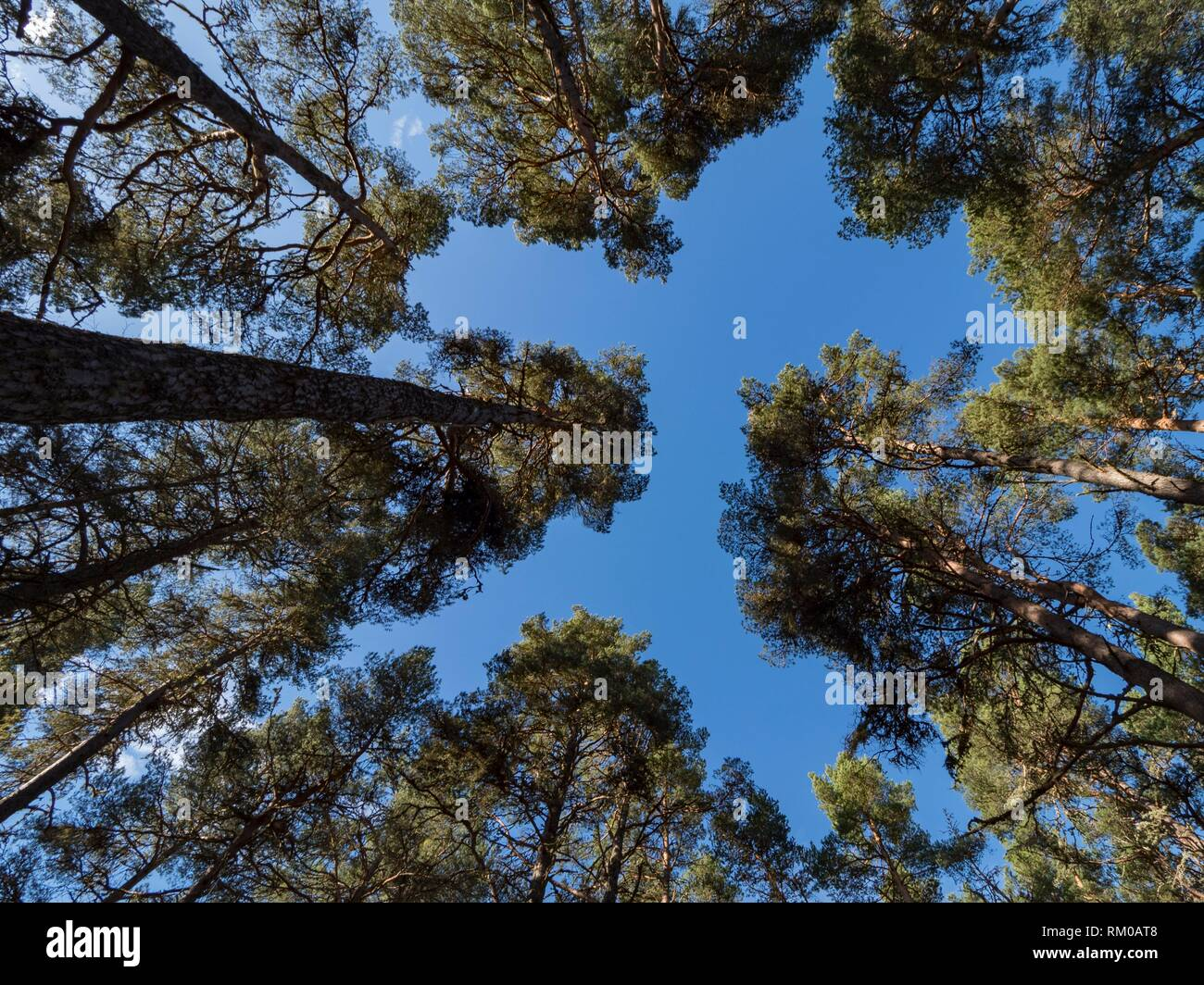 Scotland Loch Garten. - Stock Image