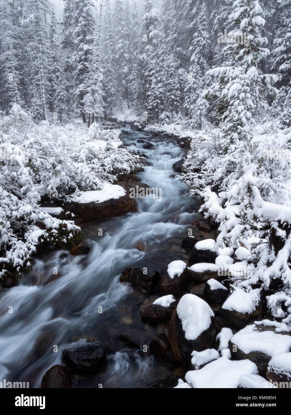 Canadian Rockies. Winter River. - Stock Image