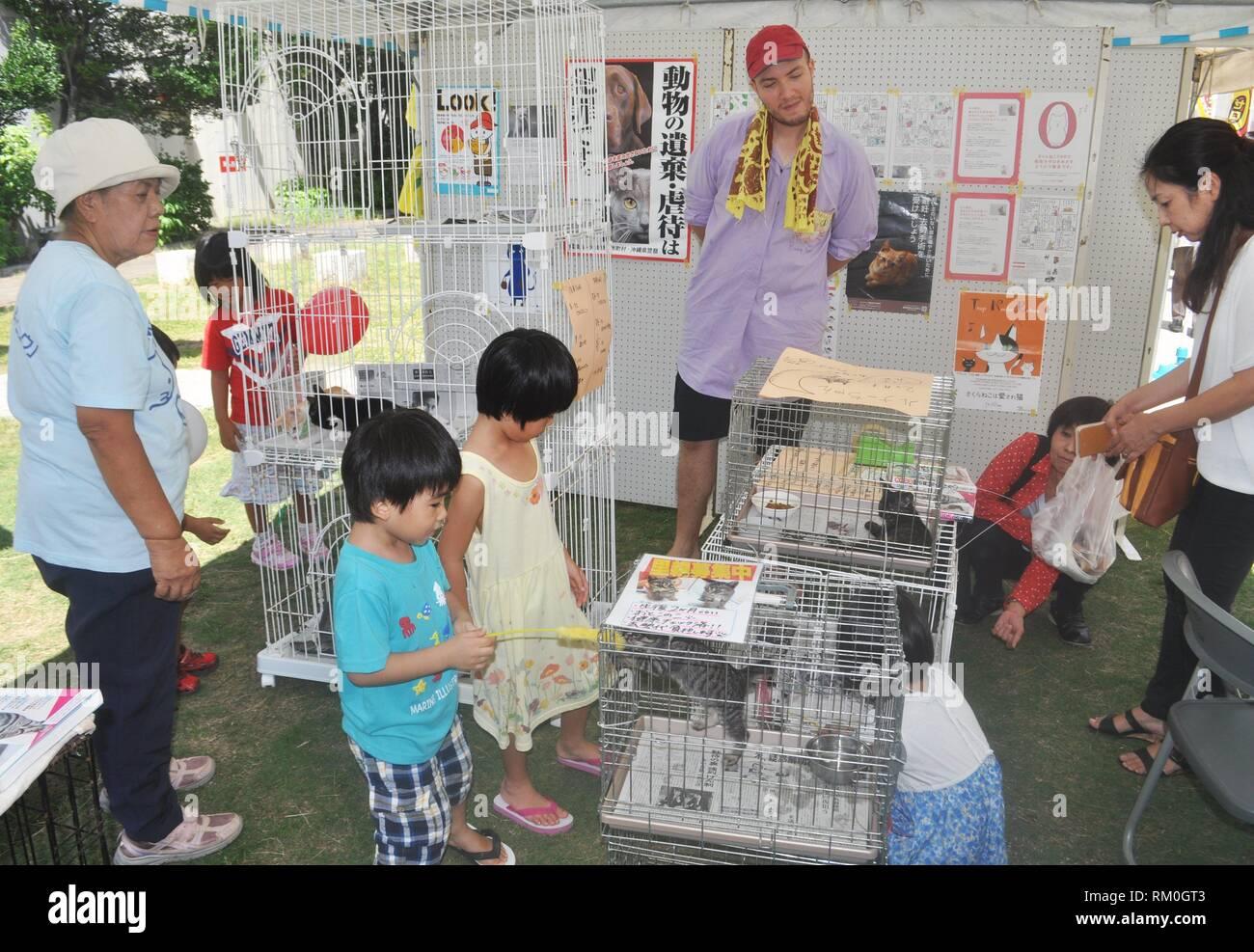 Naha, Okinawa, Japan: stray cats adoption event - Stock Image