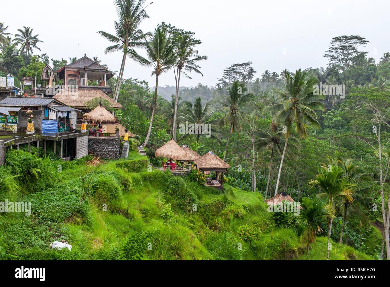 Tegallalang Rice Terrace, Bali - Stock Image