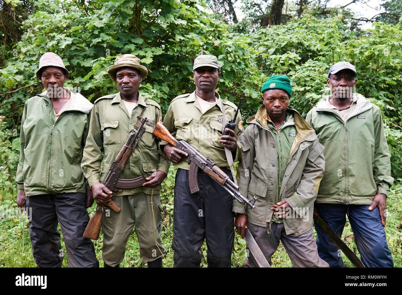 Team of guides, guards and trackers for Moutain gorilla (Gorilla beringei beringei) at the Virunga National Park, North Kivu, Democratic Republic of - Stock Image