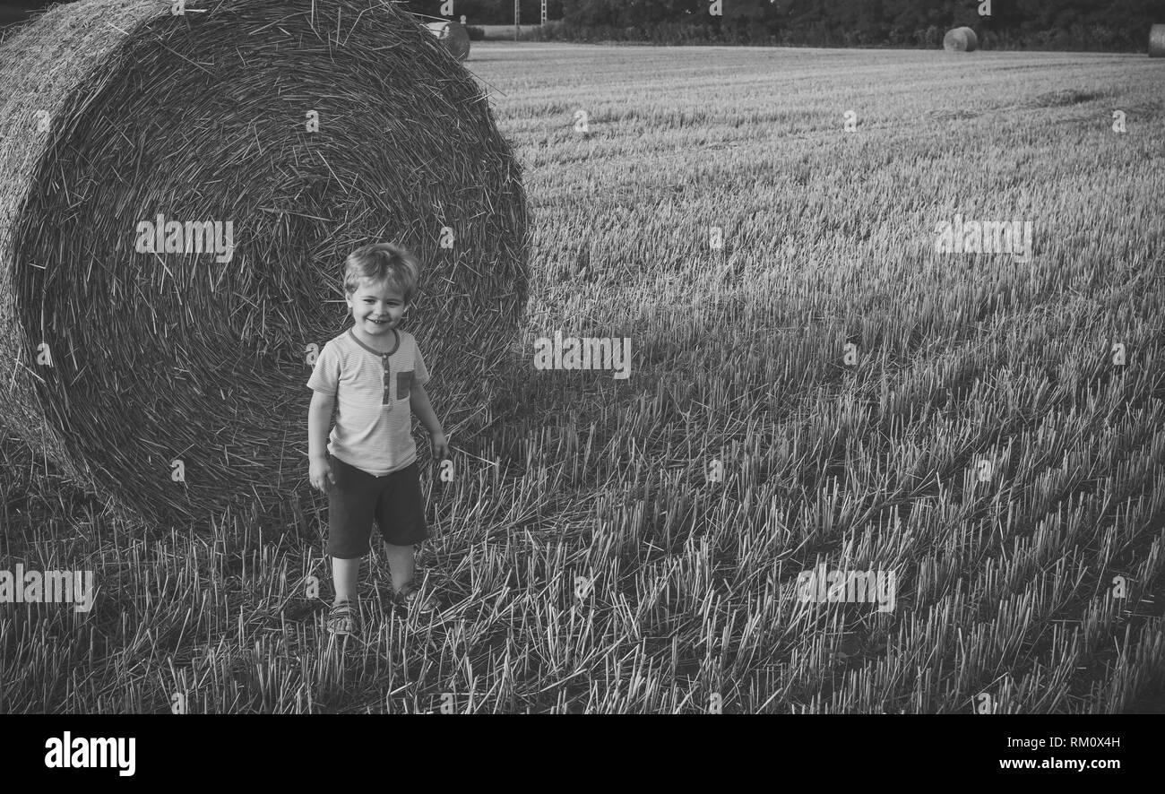 Cute little kid boy in wheat field - Stock Image