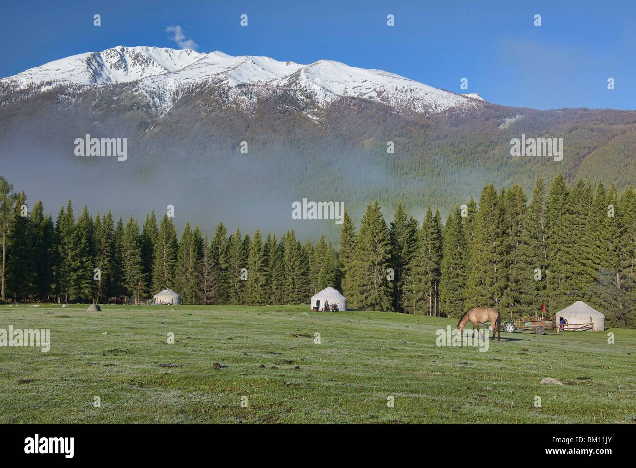 Home on the range; yurts at Kanas Lake National Park, Xinjiang, China. - Stock Image