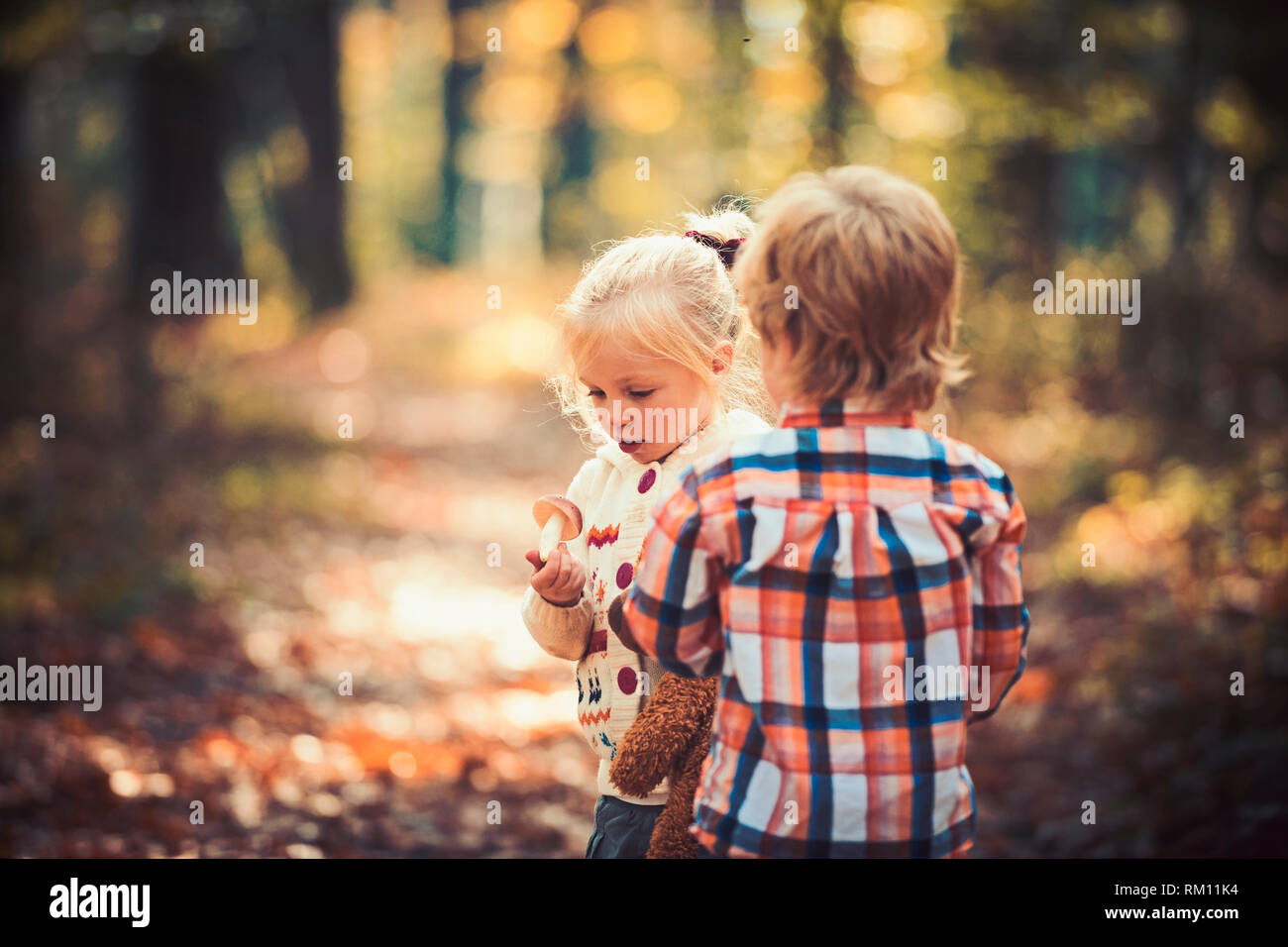 Upbringing and early development. Children harvest mushrooms in autumn forest. Little boy and girl friends camping in woods. Organic and healthy food Stock Photo