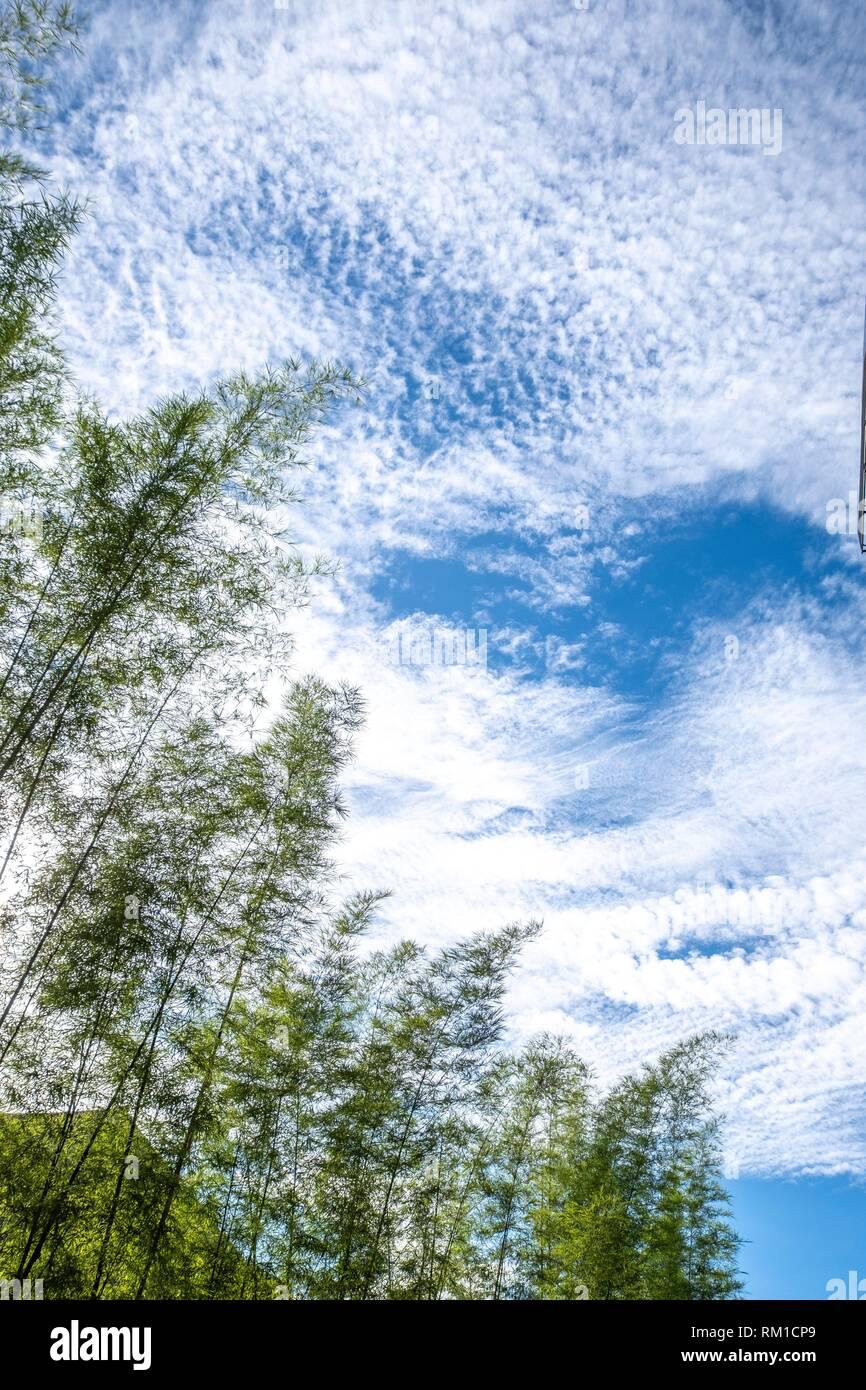 Bamboo, Singkawang, West Kalimantan, Indonesia - Stock Image