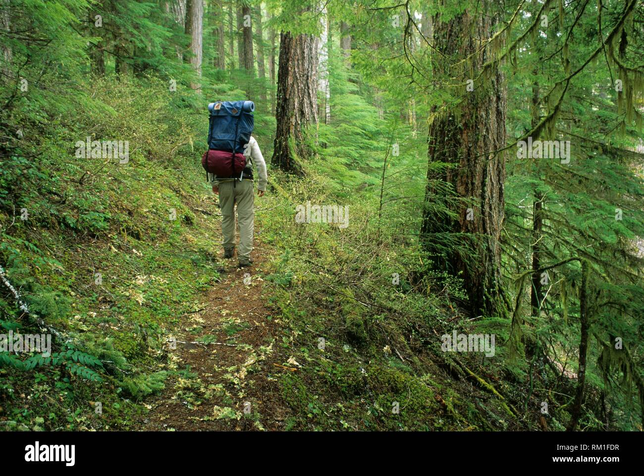 Bagby Trail, Mt  Hood National Forest, Oregon Stock Photo