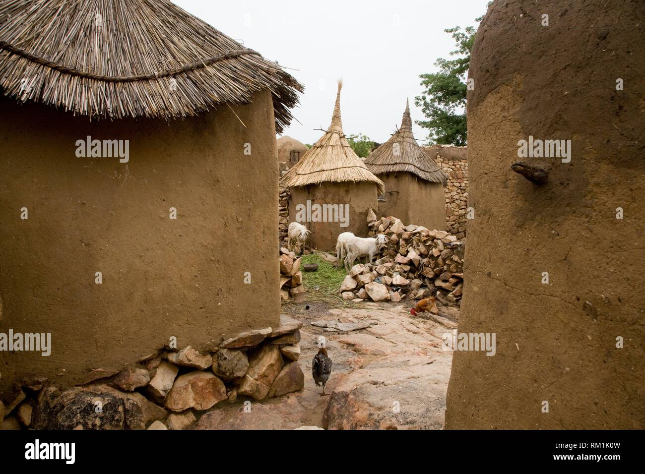 Mali, Dogon Country. Adobe barns in the village of Daga. Hens and goats looking for food on the streets. Stock Photo
