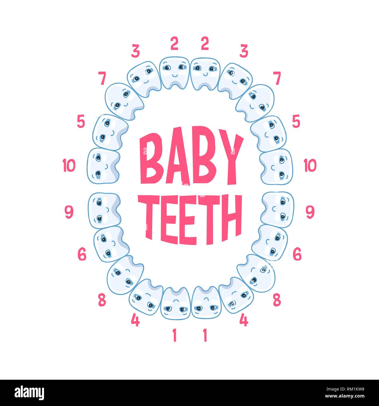 Baby teeth in a child, teeth infographics. Vector illustration of pediatric dentistry Stock Vector