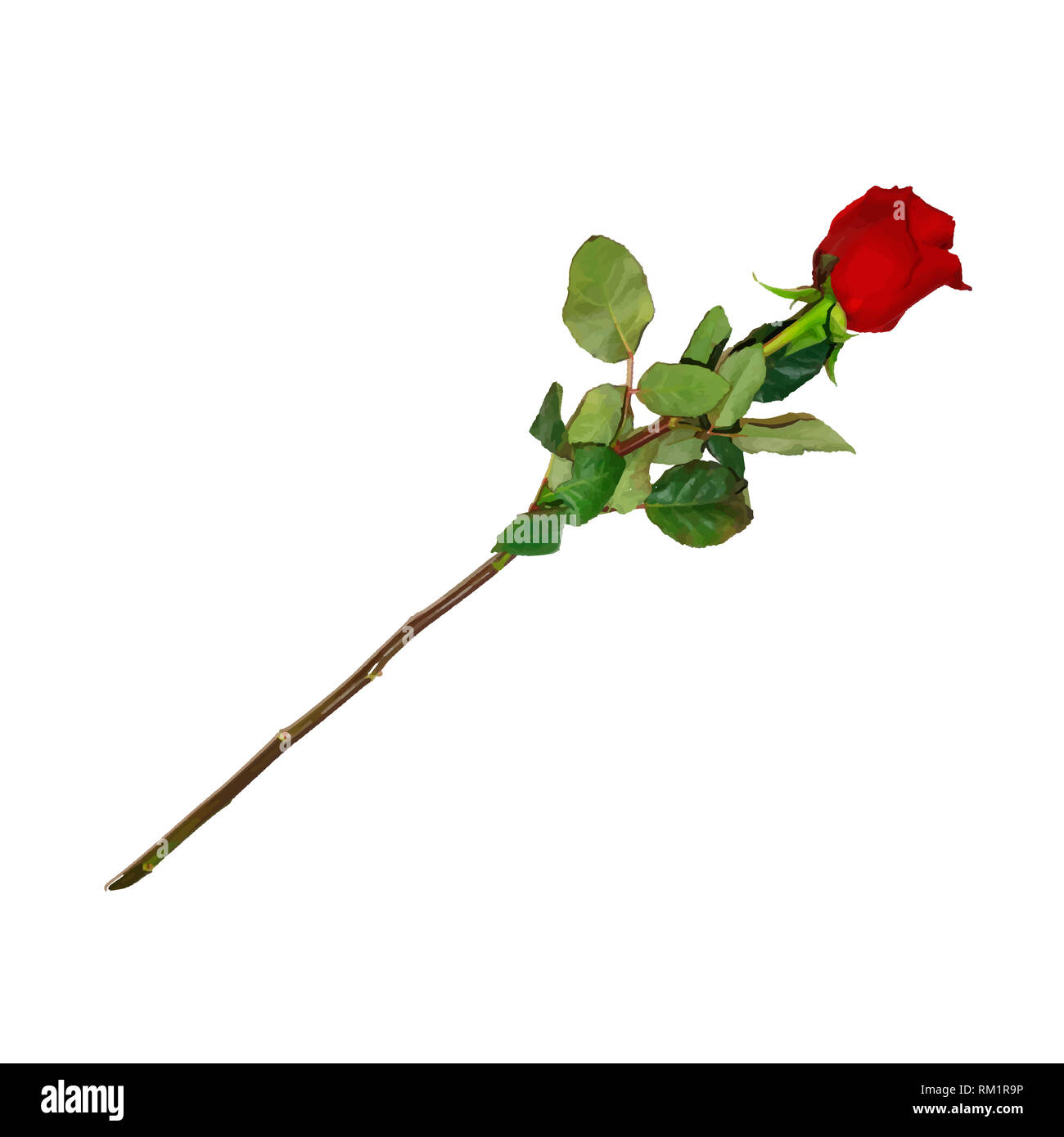 Photo Realistic, Highly Detailed Flower of Red Rose on Long Stem Isolated on White Background. Beautiful Bud of Ruby Rose with Leaves. Clip Art For Va - Stock Image