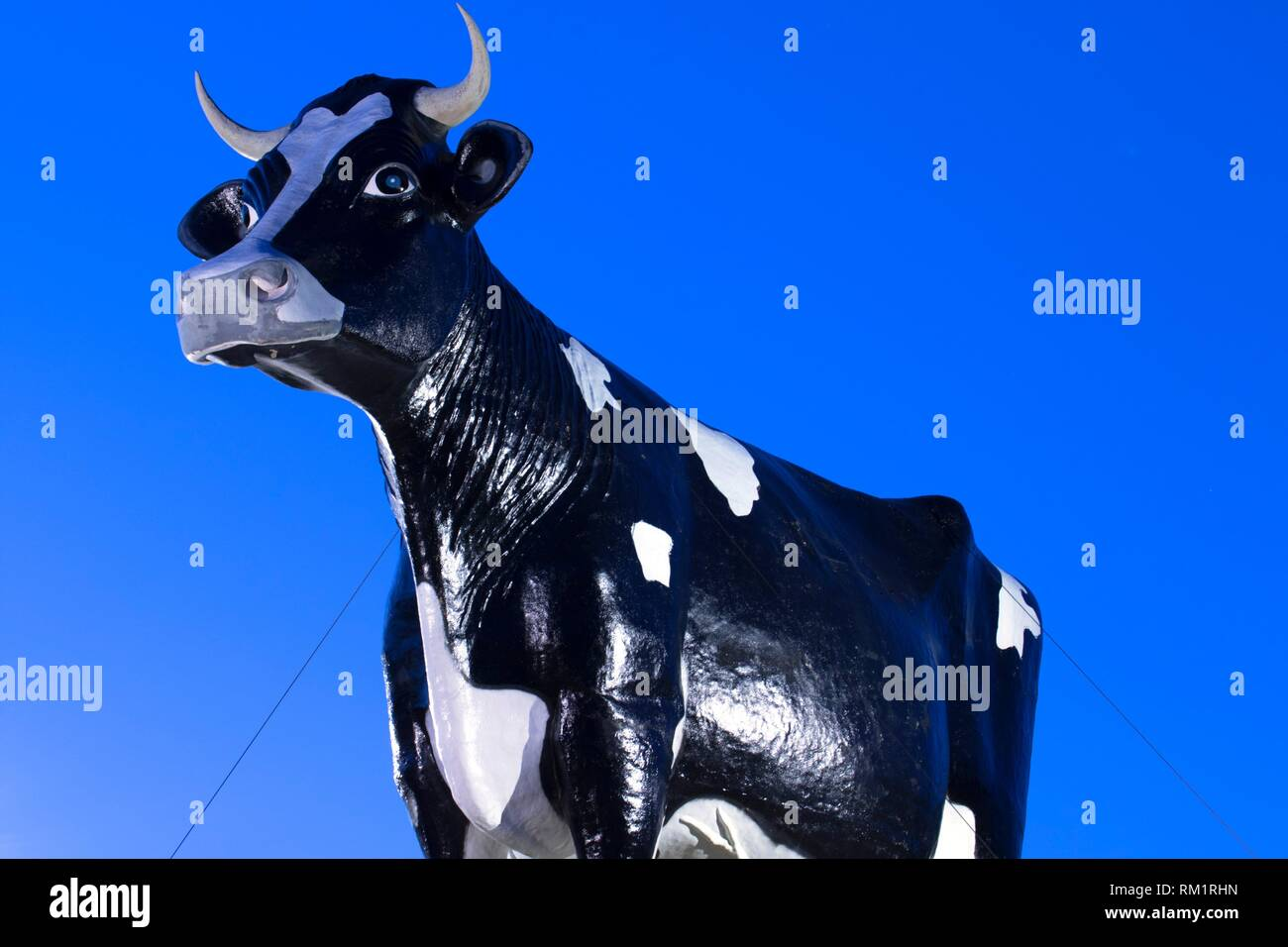 Salem Sue, World's Largest Holstein Cow, Old Red Old Ten Scenic Byway, New Salem, North Dakota. - Stock Image