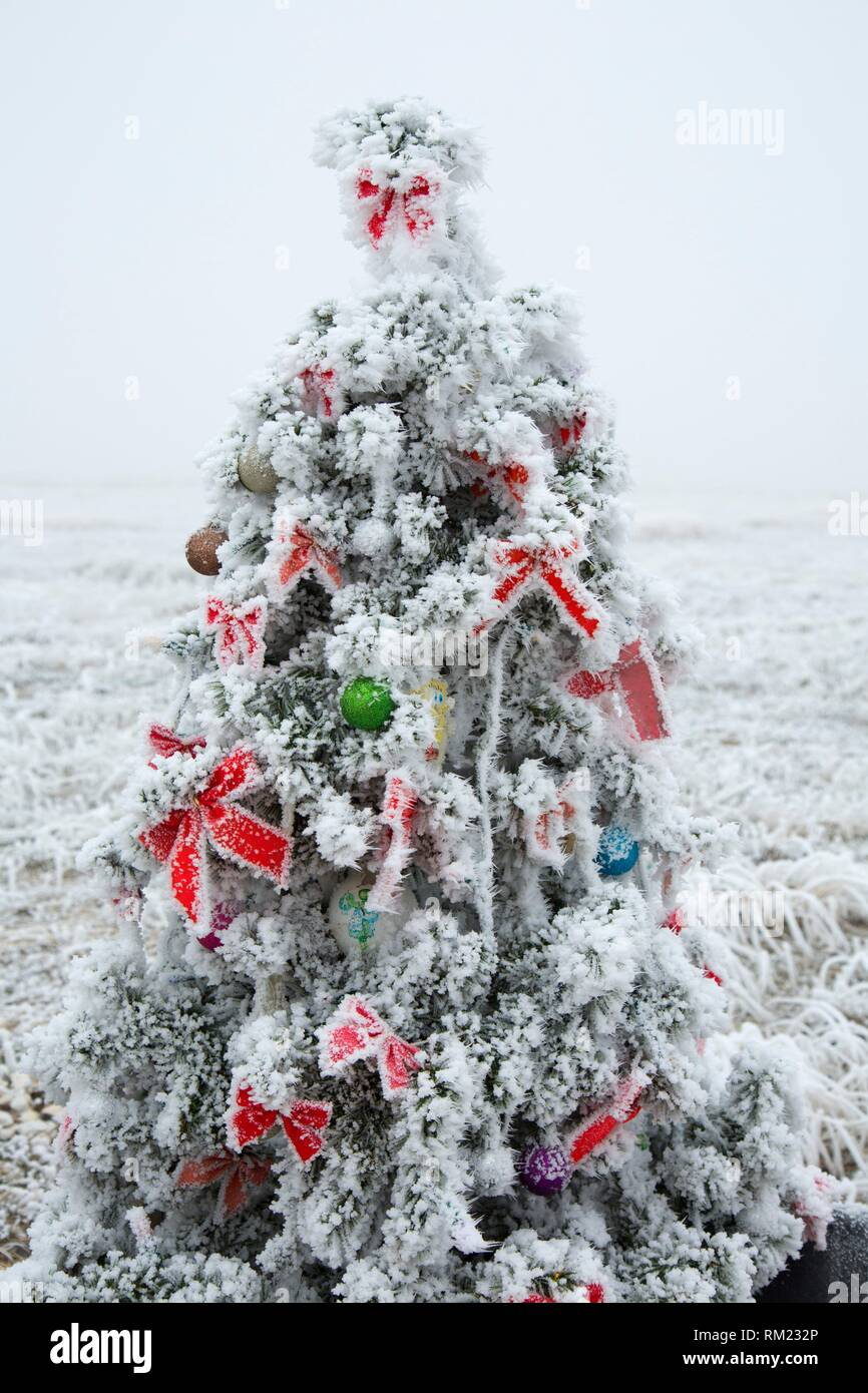 Roadside Christmas tree with frost, Jerome County, Idaho. - Stock Image