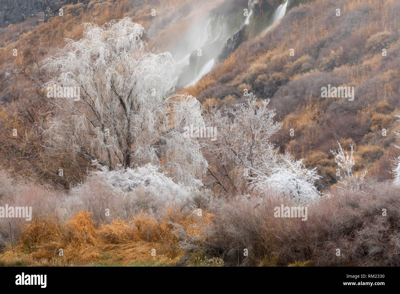 Waterfall spray ice, Thousand Springs State Park-Ritter Island, Idaho. - Stock Image