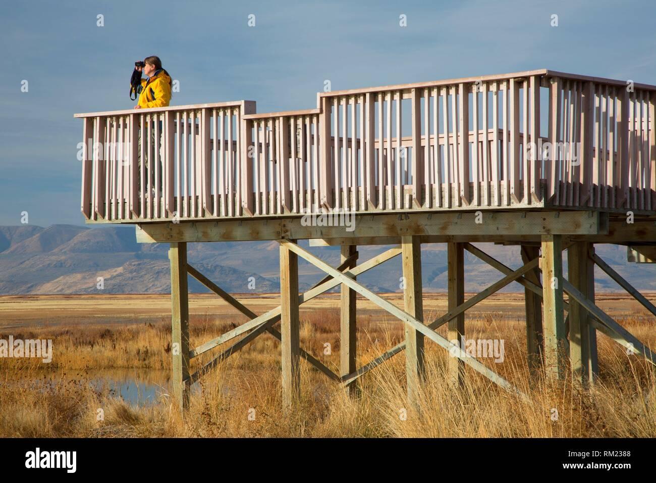 Birding from observation deck, Bear River Migratory Bird Refuge, Utah. - Stock Image