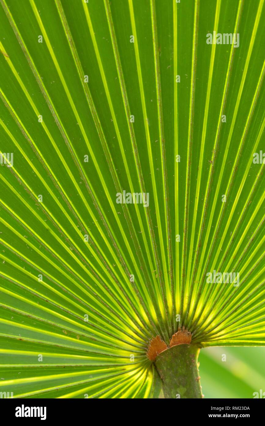 Palmetto frond, Enchanted Forest Sanctuary, Florida. - Stock Image