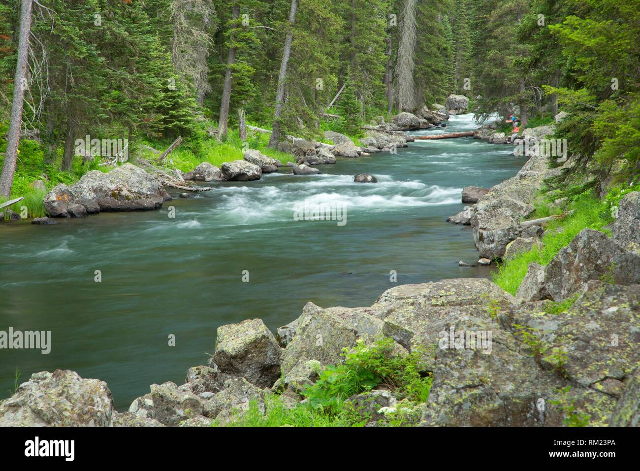 Henrys Fork along Coffee Pot Rapids Trail, Targhee National Forest, Idaho. - Stock Image