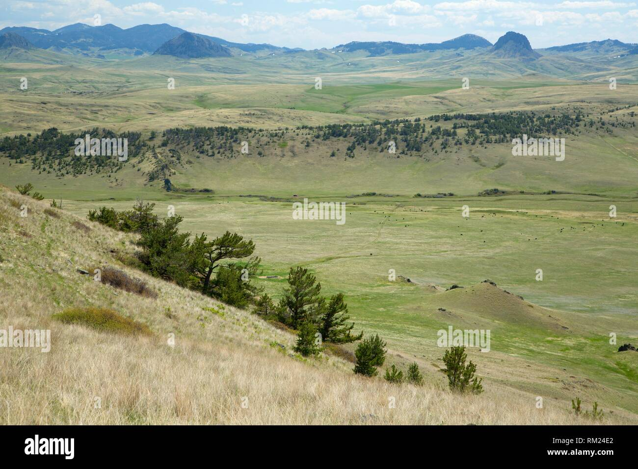 Prairie with pine, Crown Butte Preserve, Montana. - Stock Image