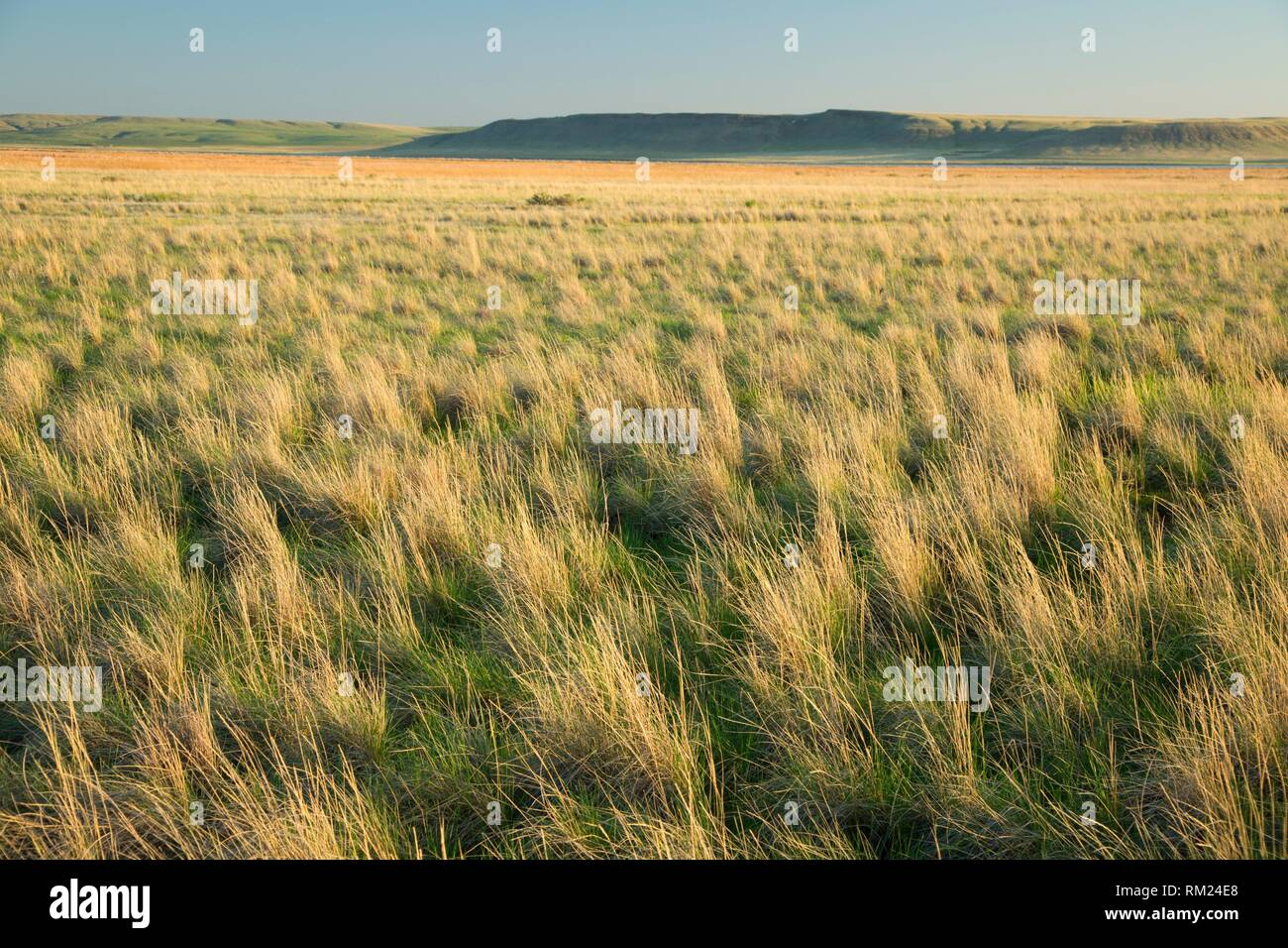 Prairie, Freezeout Lake Wildlife Management Area, Montana. - Stock Image