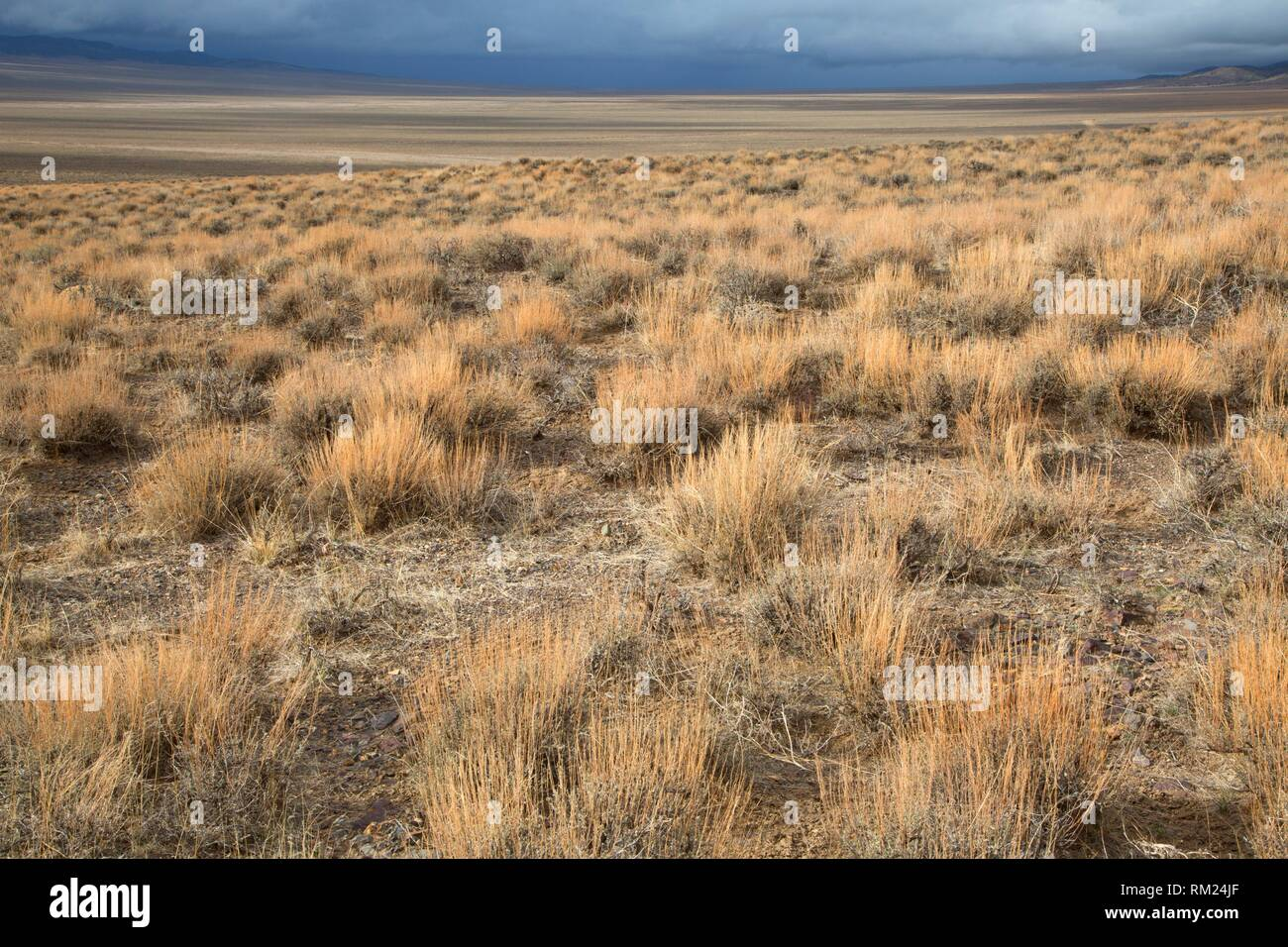 Ione Valley, Southern Nevada District Bureau of Land Management, Nevada. - Stock Image