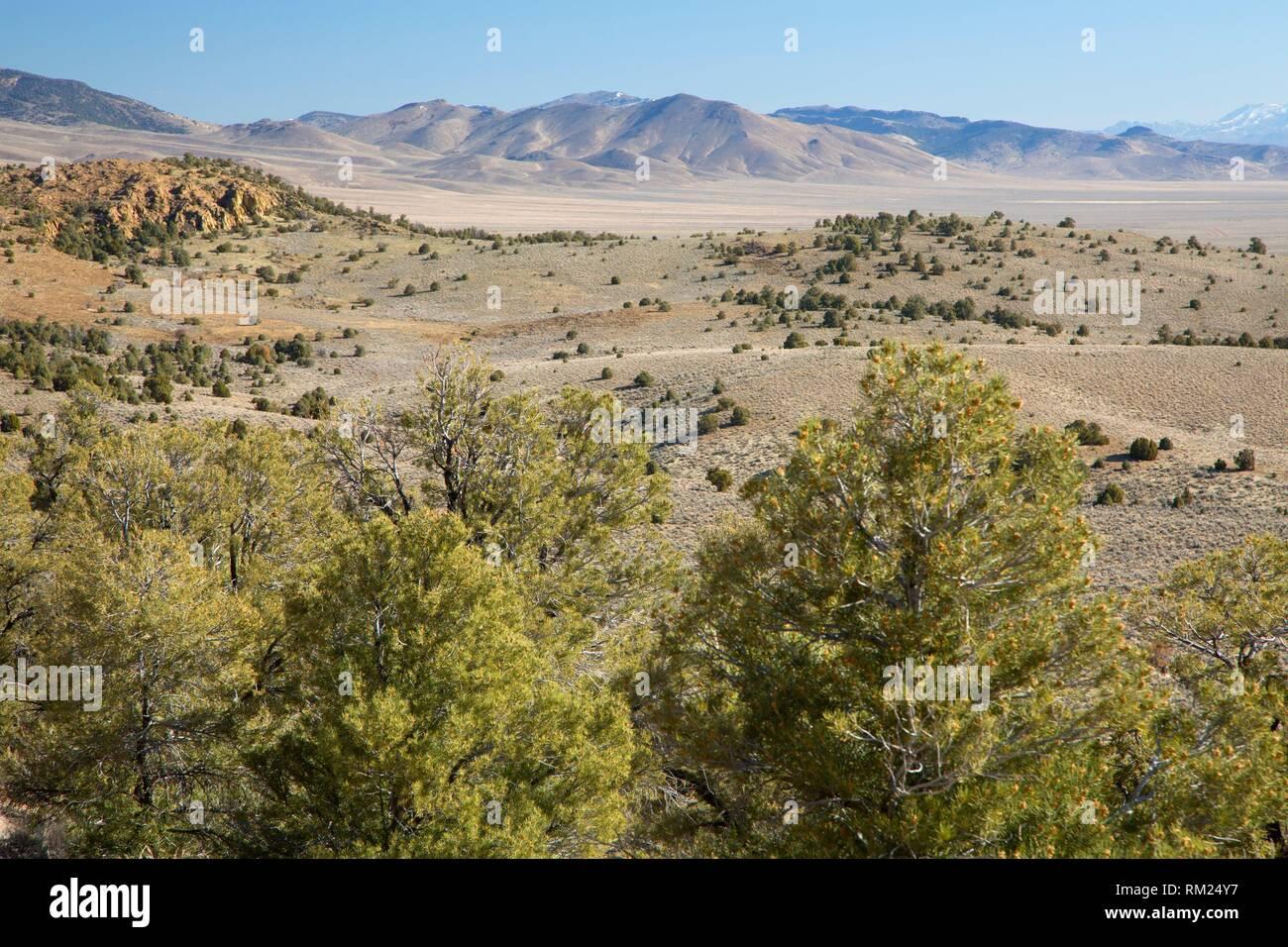 Trail view with Pinyon pine, Hickison Petroglyphs Recreation Area, Mount Lewis District Bureau of Land Management, Nevada. - Stock Image