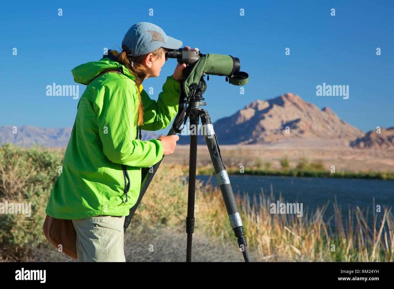 Birder with spotting scope, City of Henderson Bird Viewing Preserve, Nevada. - Stock Image