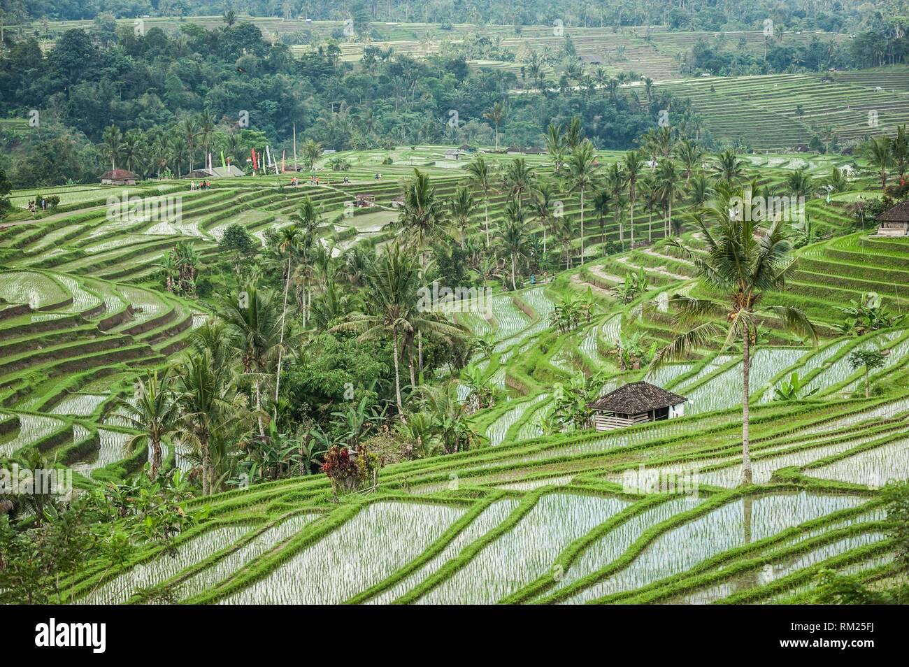 Jatiluwih Rice Terraces Bali Unesco World Heritages Tabanan