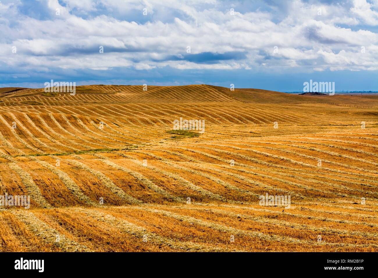 Rolling foothills of Central California following spring rain on mown hay. - Stock Image