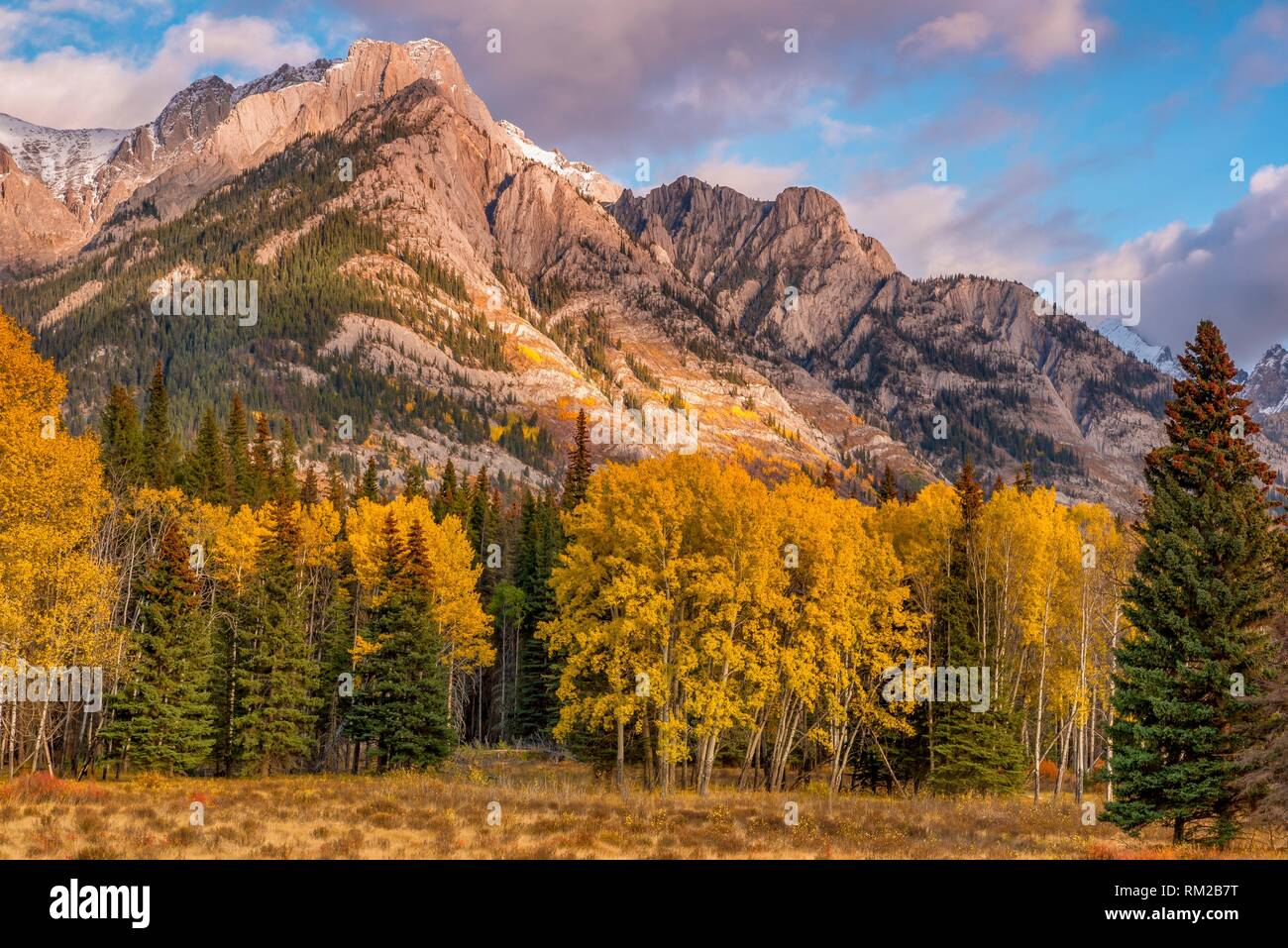Bow Valley Parkway Fall Aspen at Sunset Banff National Park Banff Alberta Cananda. - Stock Image