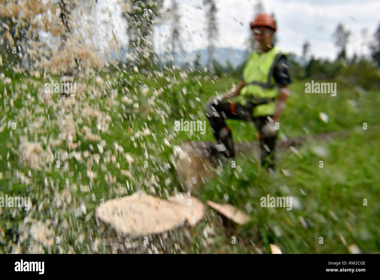 lumberjack at work, Chocholowska Valley, near Witow, Podhale Region, Polish Tatra mountains, Malopolska Province (Lesser Poland), Poland, Central - Stock Image
