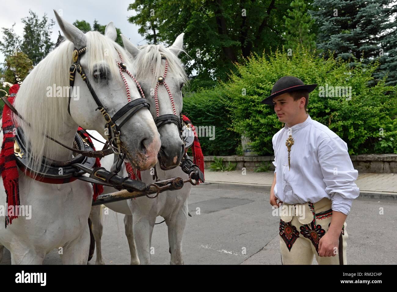 young coachman of carriage with his horses, Zakopane, Podhale region, Tatra Mountains, Malopolska Province (Lesser Poland), Poland, Central Europe. - Stock Image