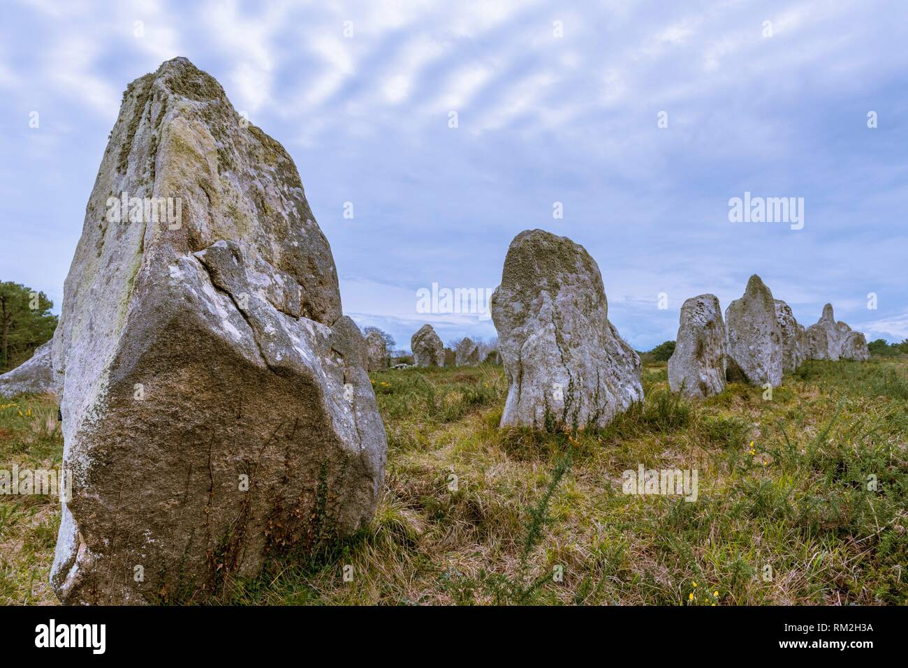 Kermario Alignment, Megalithic site of Carnac, Morbihan, French Brittany, France, Europe. - Stock Image