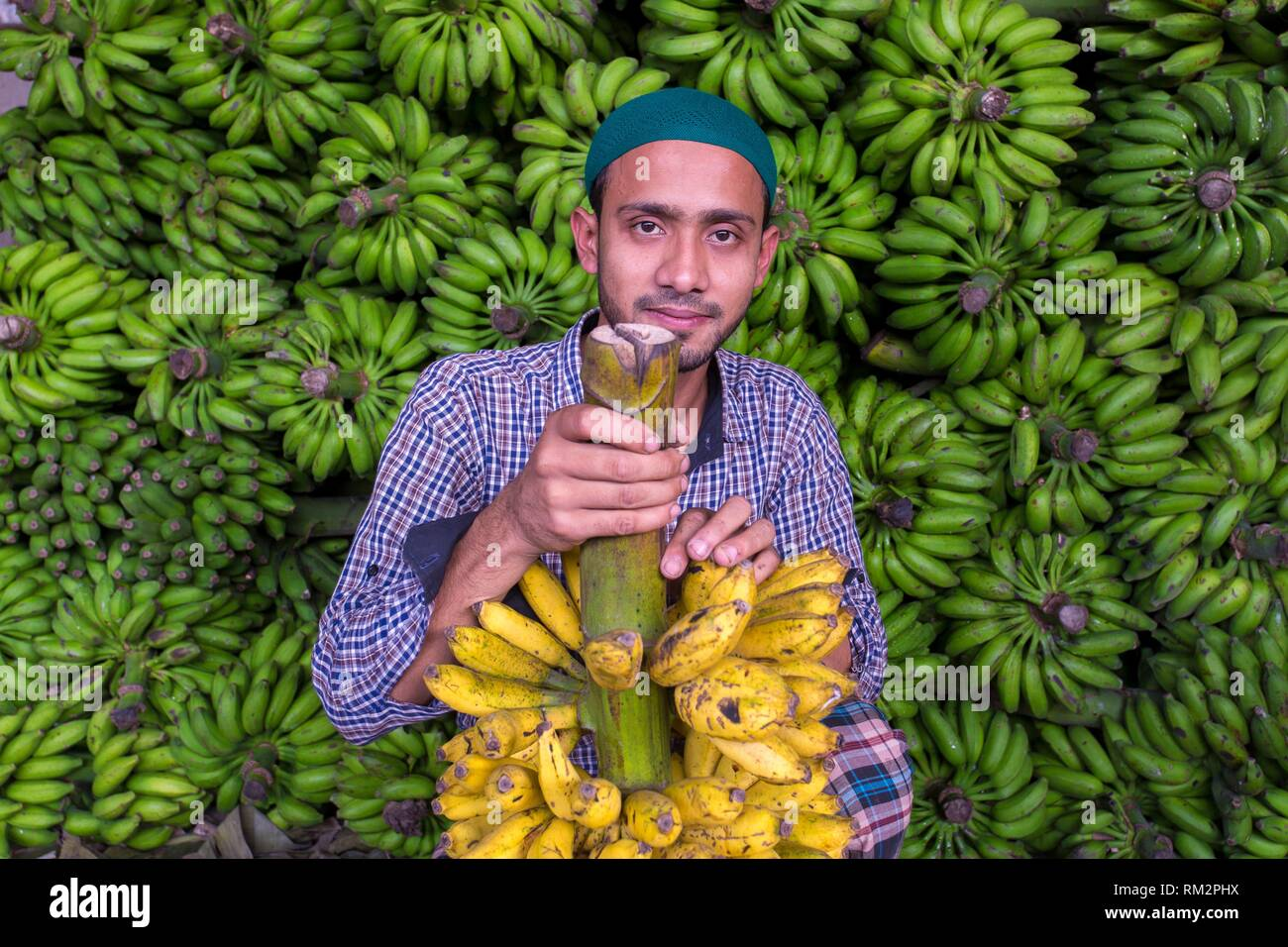 A banana vendor in green banana background that's why he showing branches of Ripe bananas at Dhaka, Bangladesh. - Stock Image