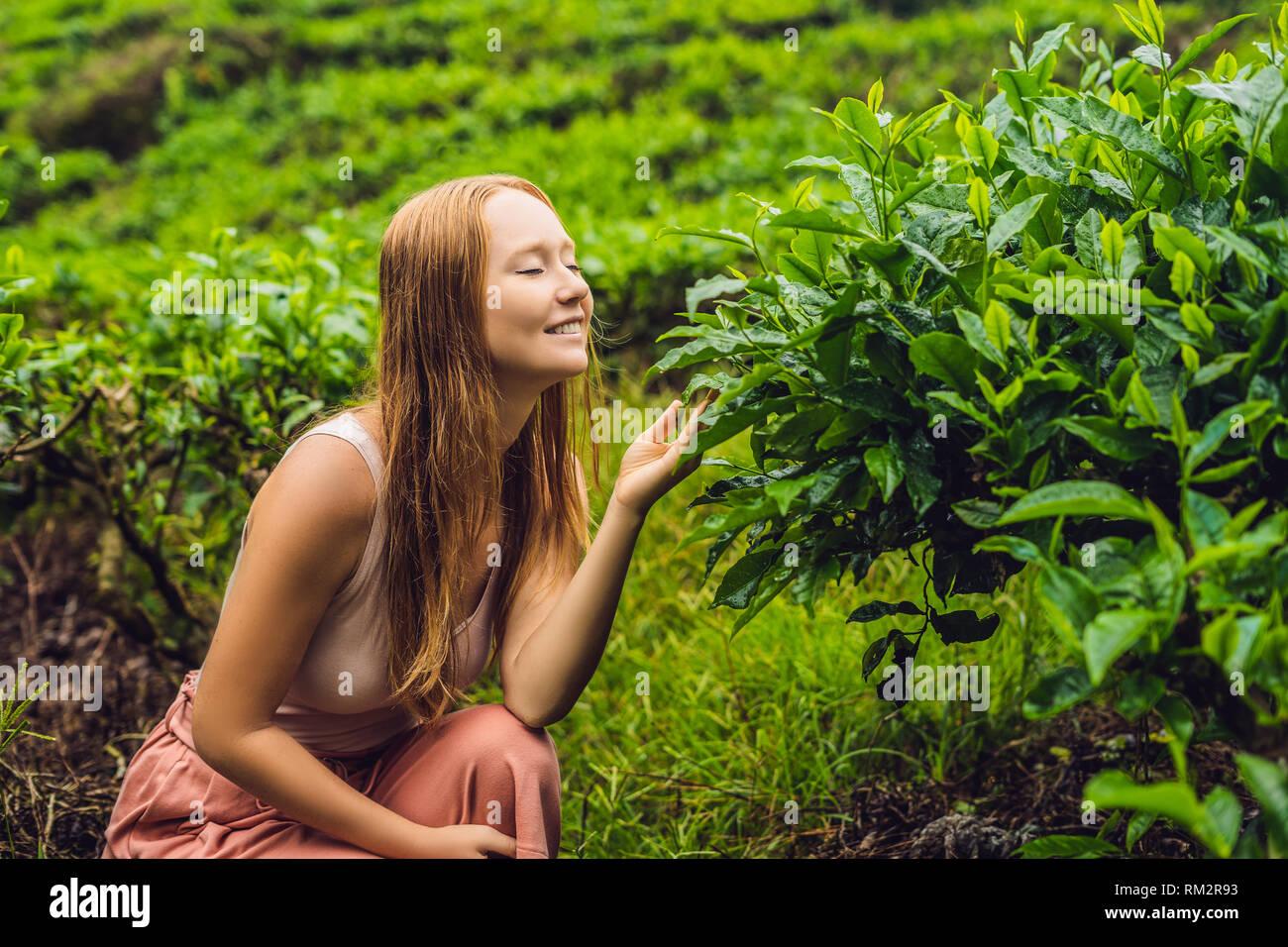 Women tourist at a tea plantation. Natural selected, Fresh tea leaves in tea farm in Cameron Highlands, Malaysia. Ecotourism concept - Stock Image