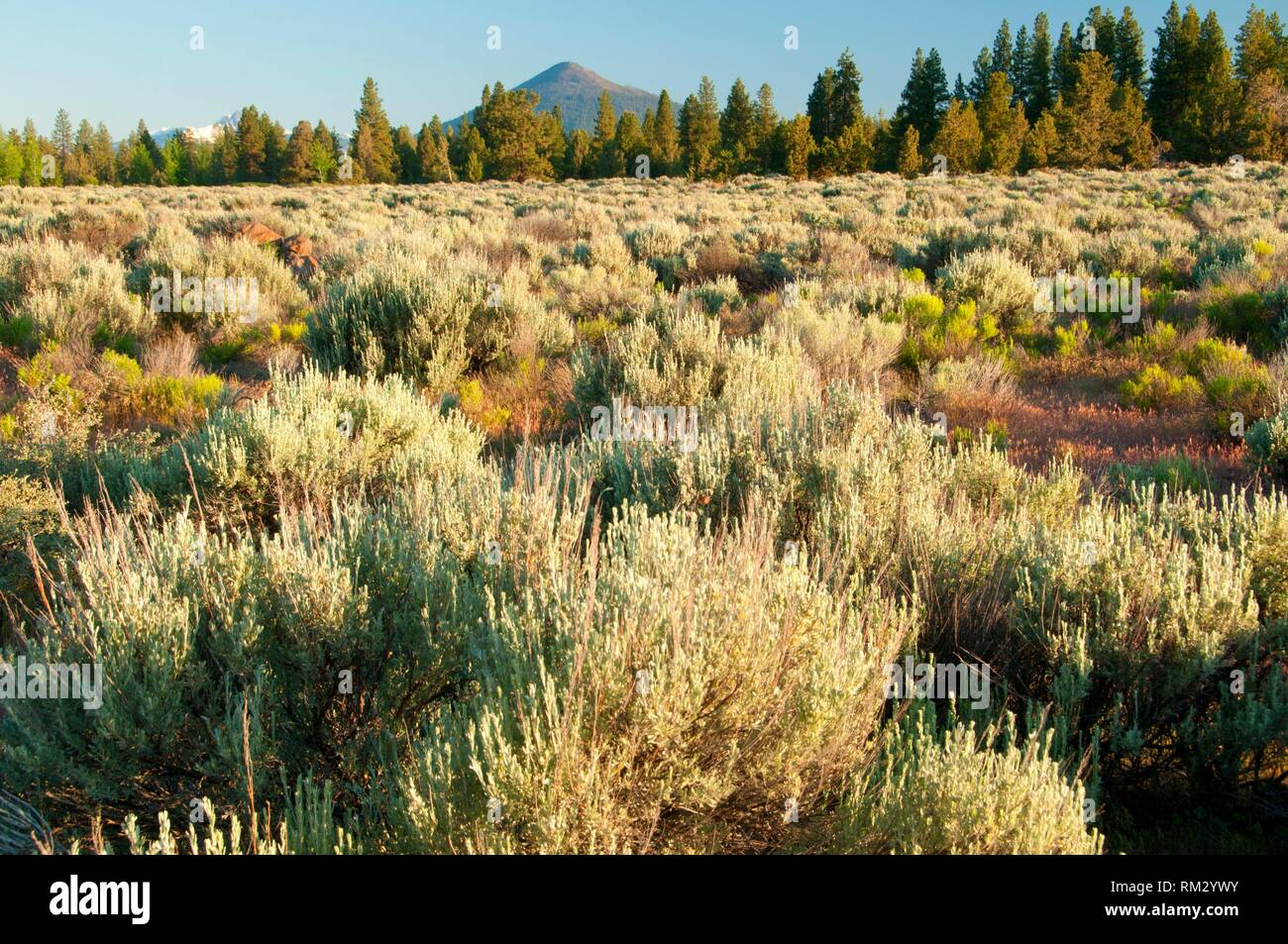Black Butte, Deschutes County, Oregon. - Stock Image