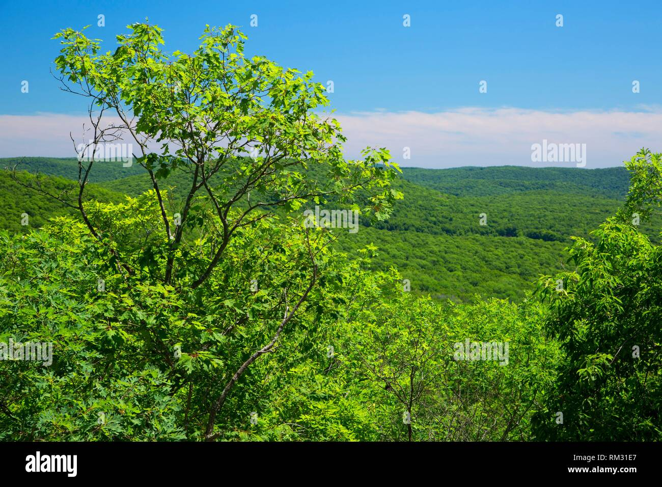 View on Macedonia Ridge Trail, Macedonia Brook State Park, Connecticut. - Stock Image