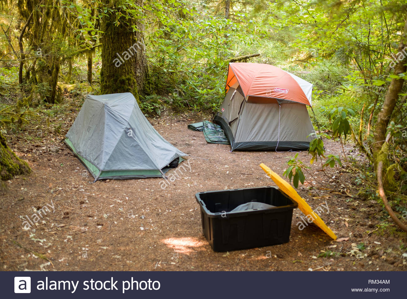 Two small tents setup in clearing at Humbug Campground, Willamette National Forest, Marion County, Oregon, USA - Stock Image