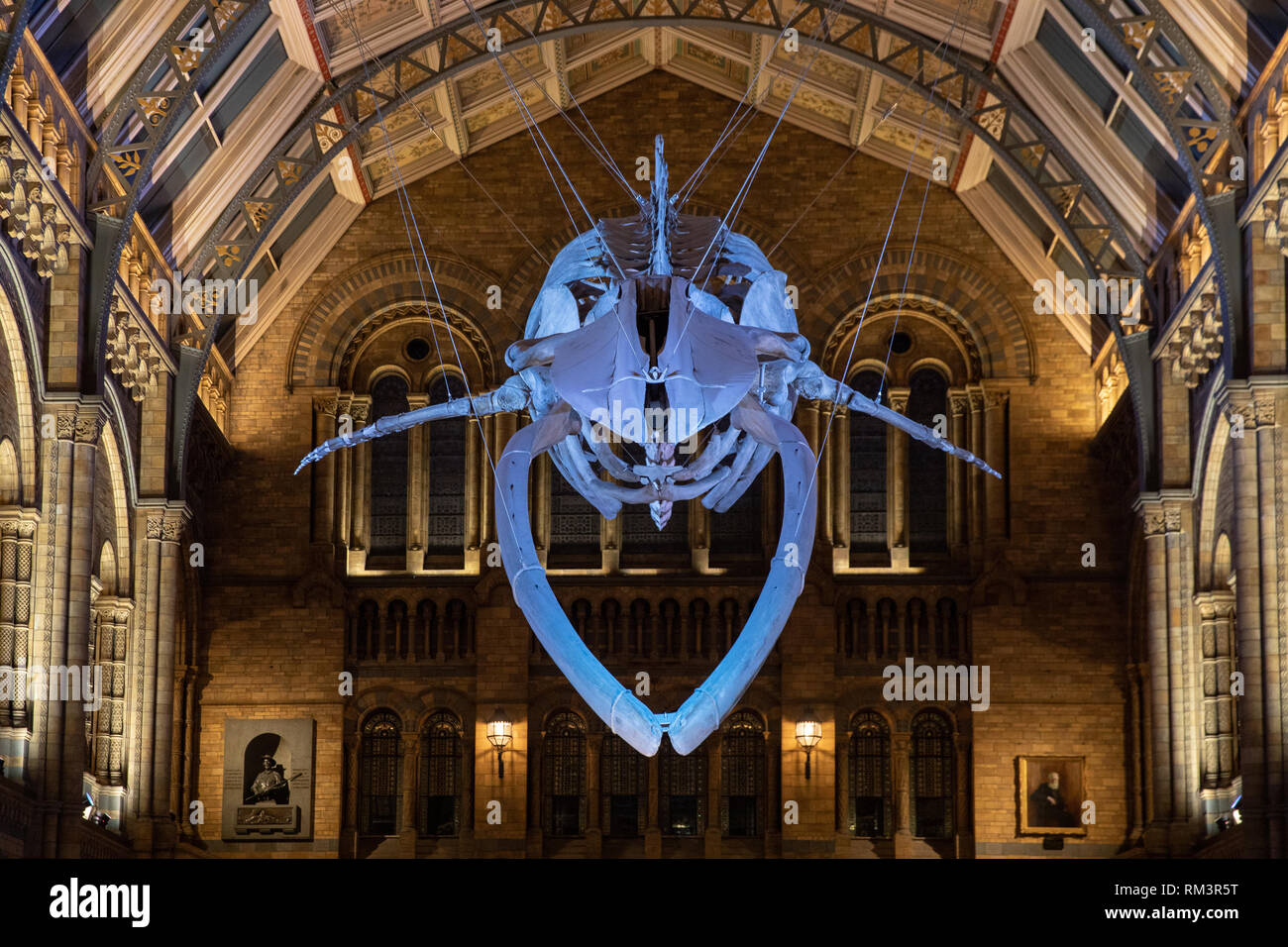 The Natural History Museum, London, Uk - Stock Image