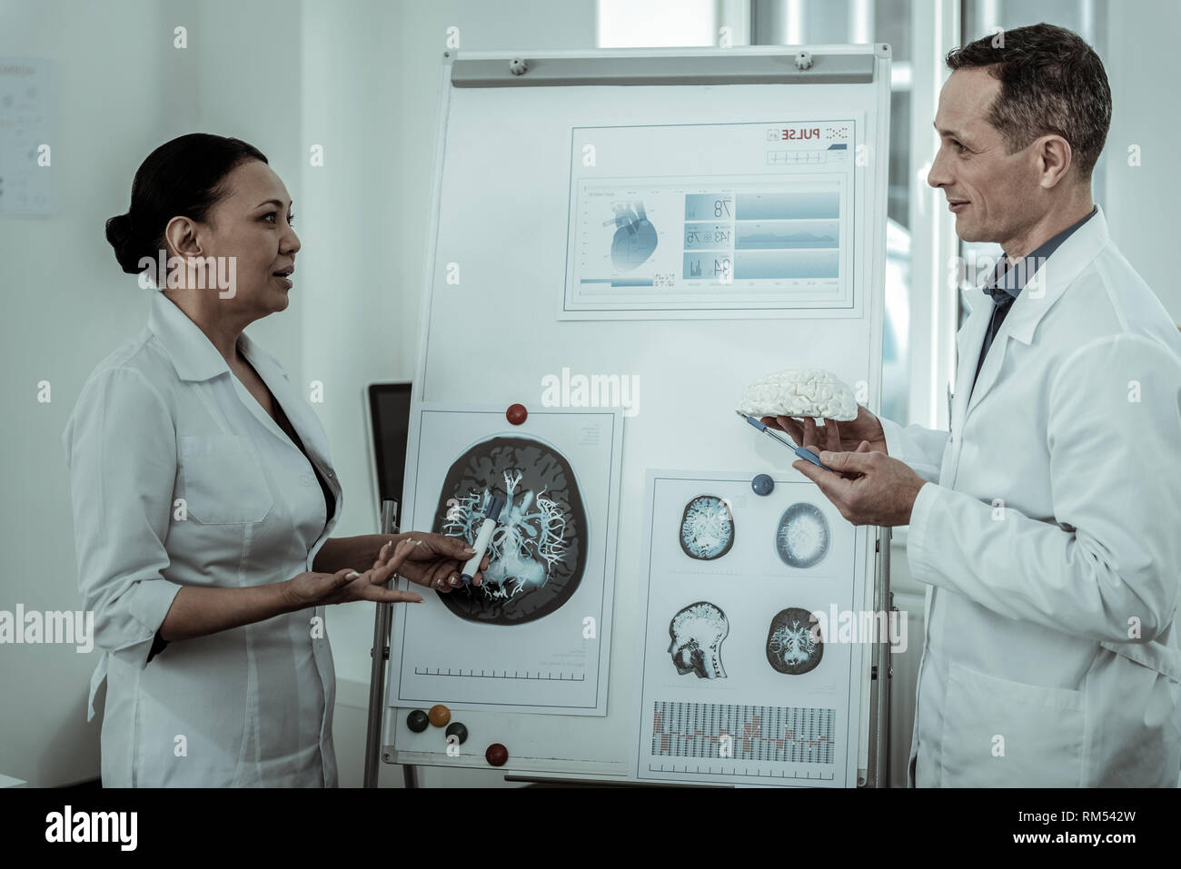 Both doctors analyzing situation with brain system - Stock Image